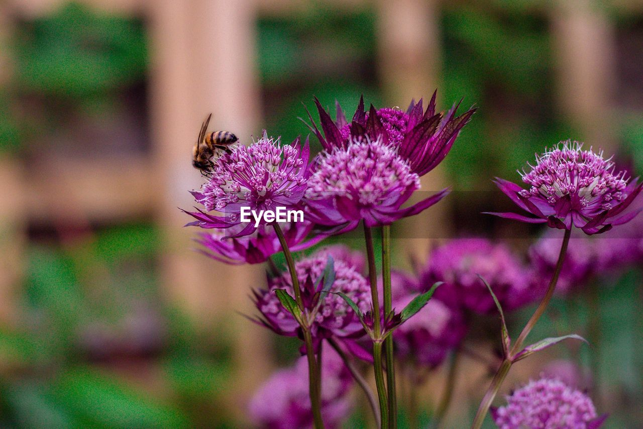 flowering plant, flower, animal, fragility, beauty in nature, vulnerability, animal themes, freshness, plant, animal wildlife, animals in the wild, insect, invertebrate, petal, close-up, growth, bee, flower head, one animal, nature, purple, no people, pollination, outdoors