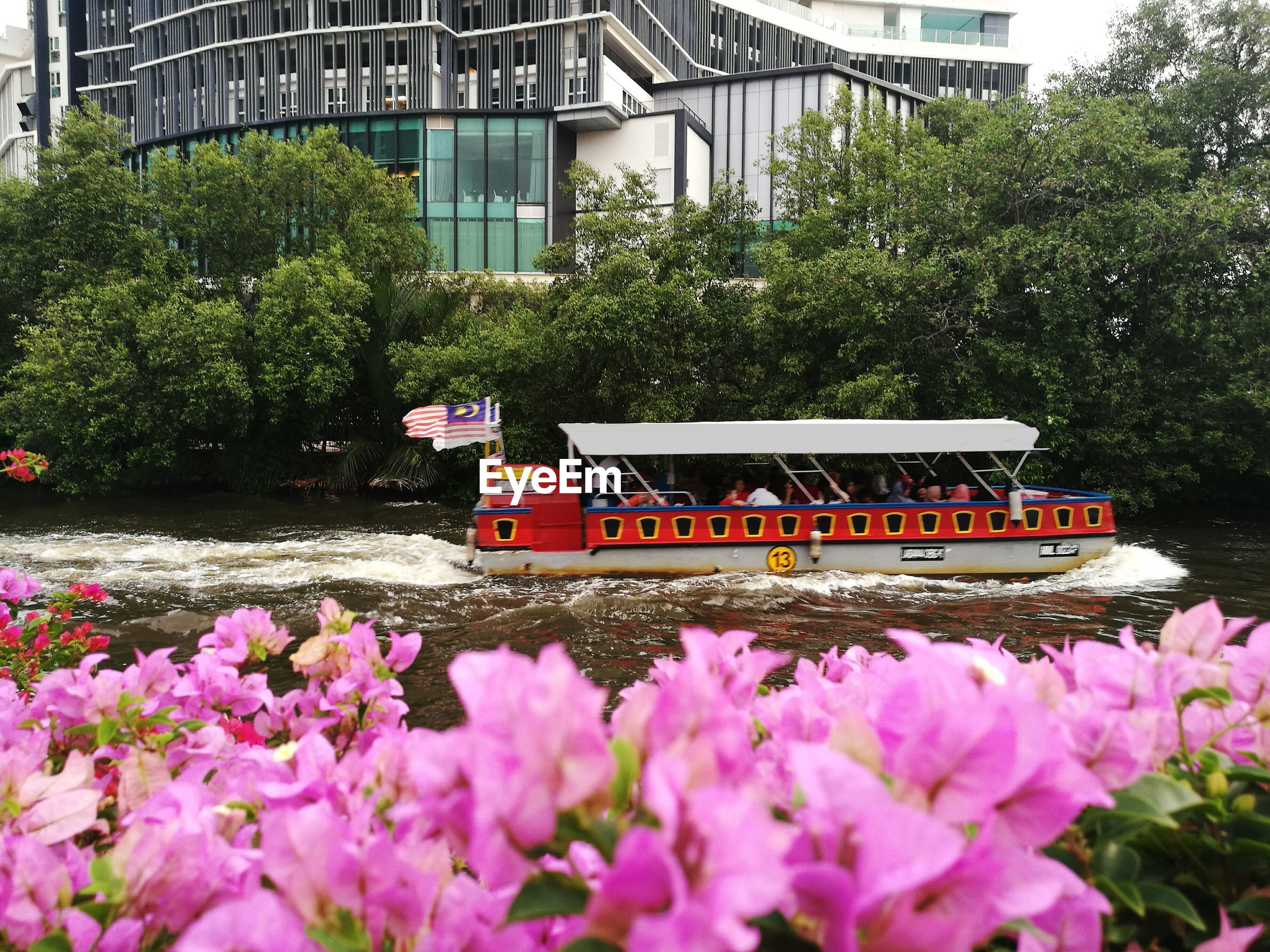 VIEW OF FLOWERS IN CITY