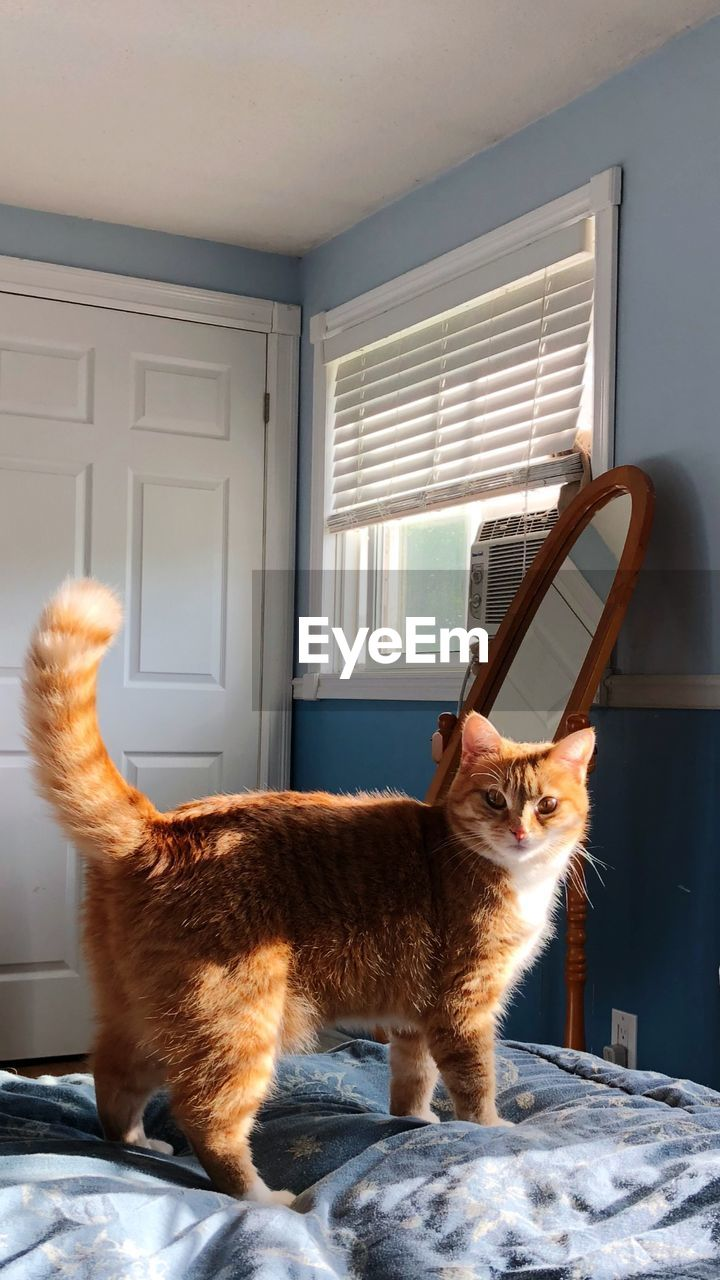 mammal, domestic animals, domestic, pets, one animal, window, cat, domestic cat, feline, vertebrate, indoors, home interior, no people, day, looking, side view, whisker
