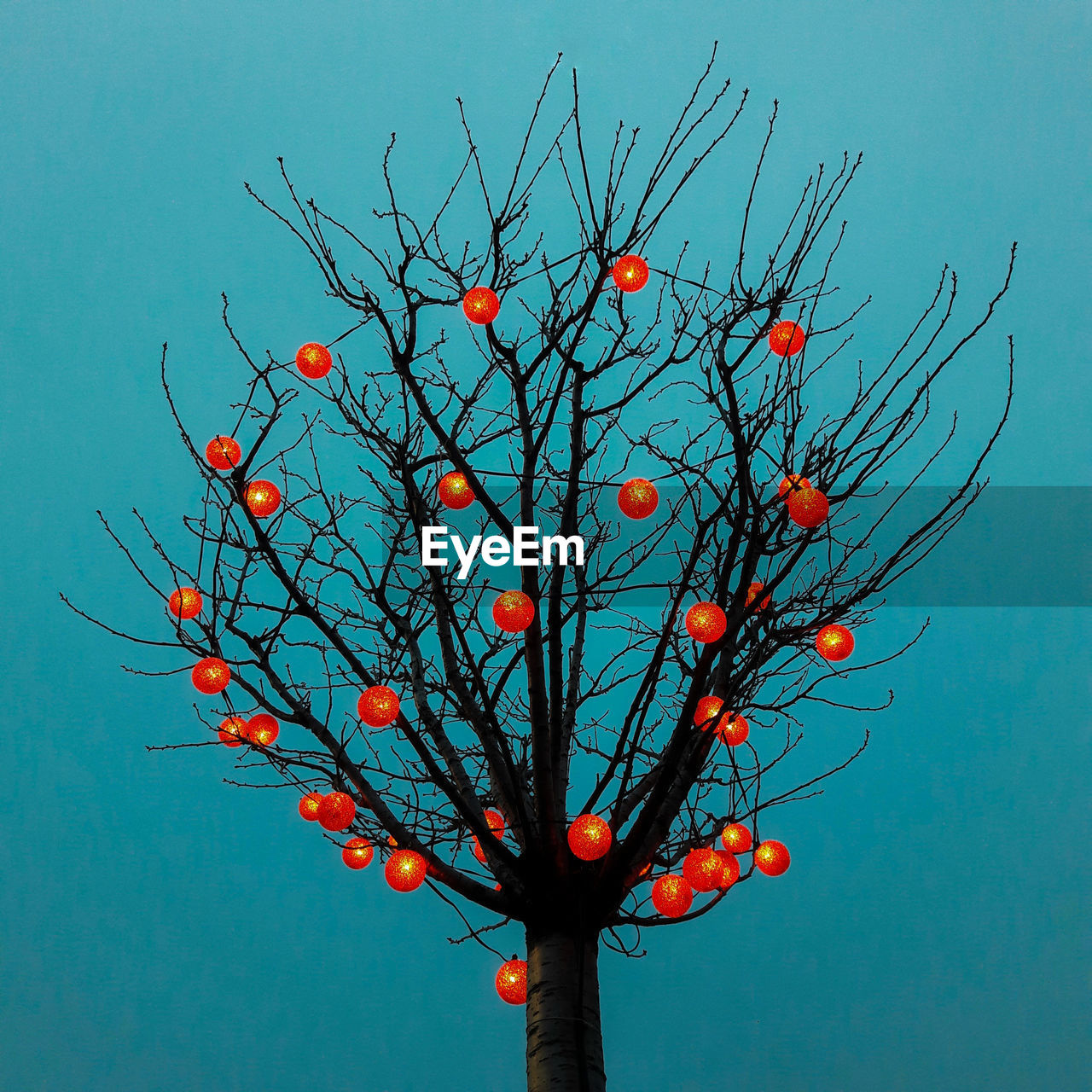 low angle view, no people, tree, outdoors, day, bare tree, fruit, branch, red, sky, clear sky, nature, close-up