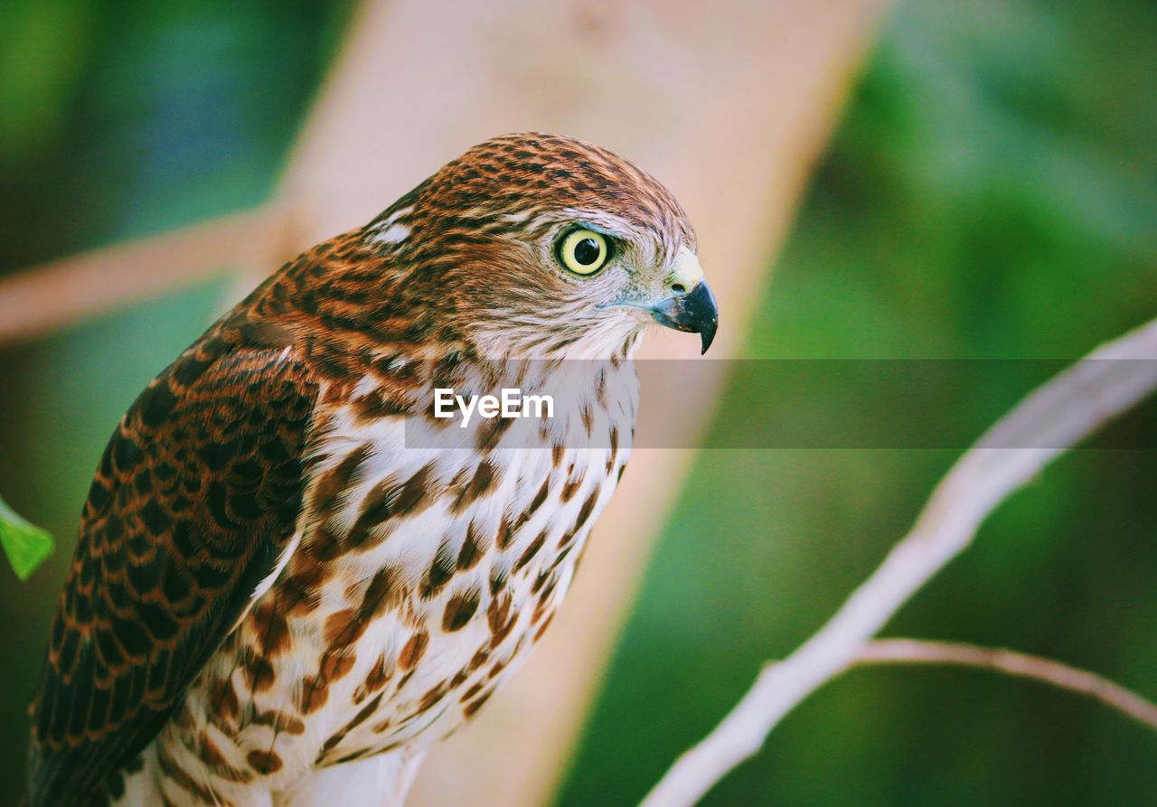 animal themes, animal wildlife, one animal, animals in the wild, animal, vertebrate, bird, focus on foreground, close-up, no people, day, bird of prey, nature, animal markings, outdoors, perching, green color, looking away, looking, beauty in nature