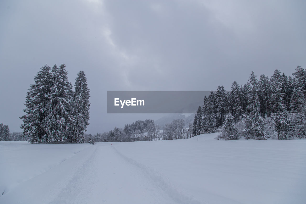 cold temperature, winter, snow, weather, nature, tree, beauty in nature, white color, tranquility, no people, scenics, sky, tranquil scene, landscape, outdoors, cloud - sky, day, frozen