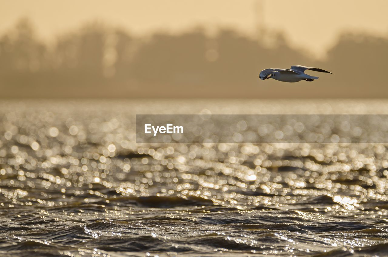 water, sea, bird, animal themes, animals in the wild, animal, animal wildlife, flying, waterfront, vertebrate, beauty in nature, sky, one animal, nature, horizon over water, no people, scenics - nature, horizon, focus on foreground, outdoors, seagull