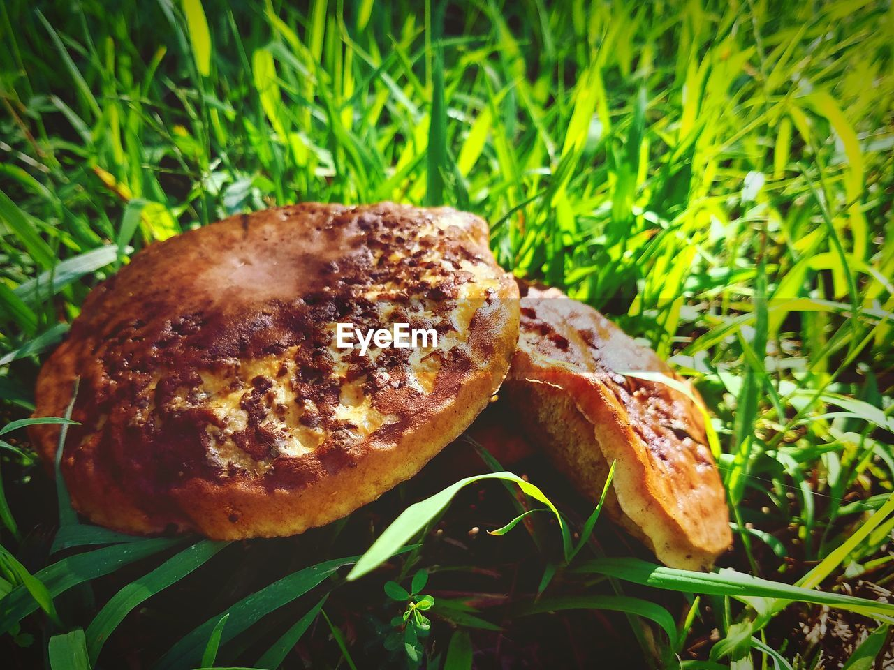 grass, green color, no people, food, growth, food and drink, freshness, nature, close-up, plant, mushroom, day, outdoors, beauty in nature