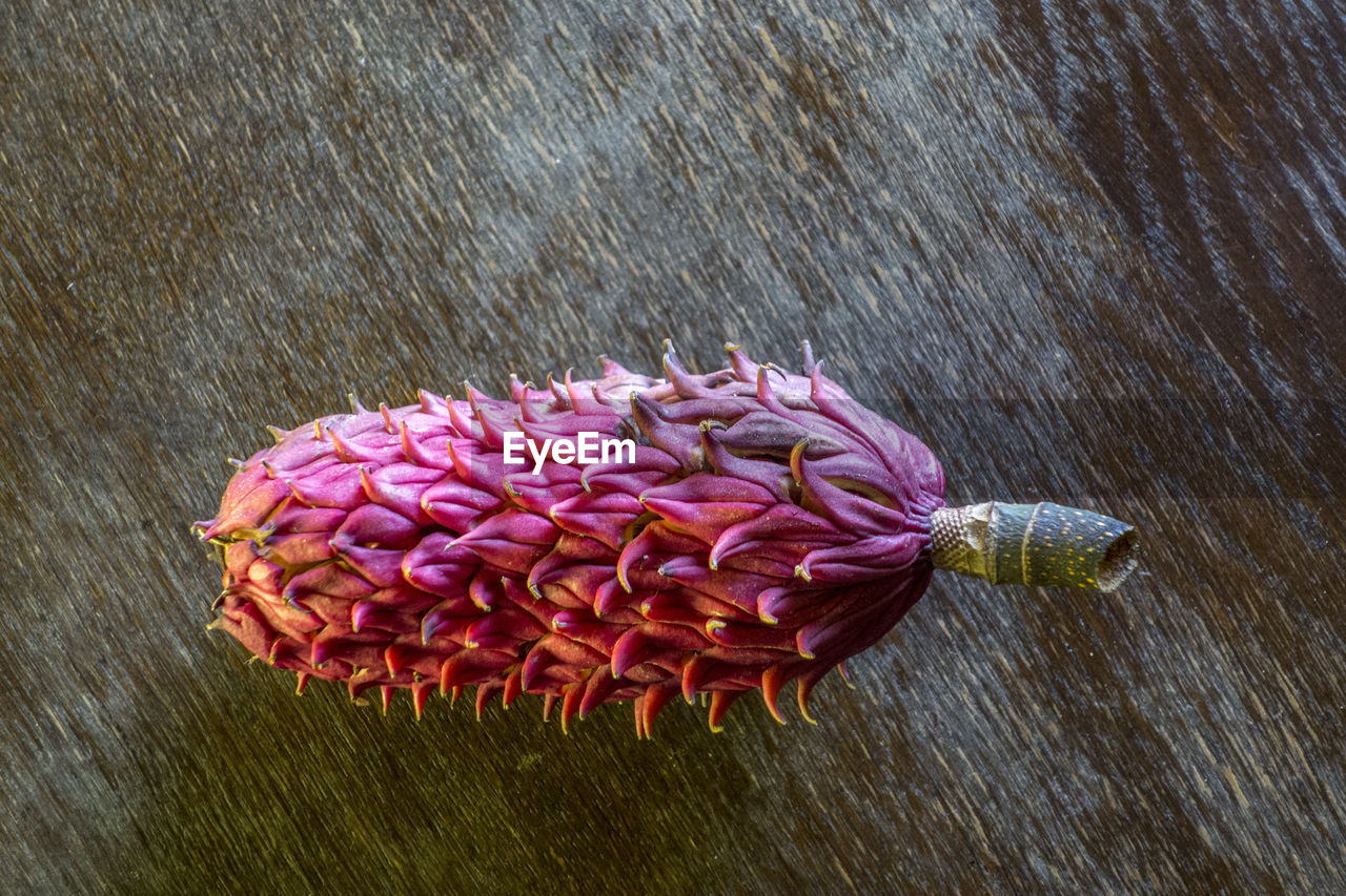 flower, freshness, no people, petal, fragility, high angle view, close-up, nature, beauty in nature, indoors, day, healthy eating, flower head, food