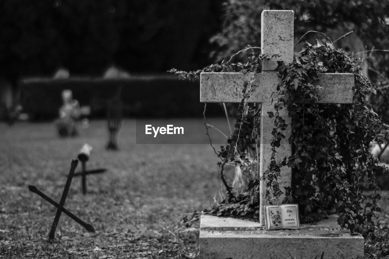 focus on foreground, cemetery, day, no people, outdoors, close-up, cross, nature, tree
