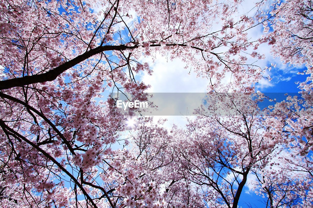 low angle view, tree, branch, beauty in nature, nature, sky, growth, flower, day, blossom, no people, outdoors, cloud - sky, springtime, sunlight, tranquility, fragility, backgrounds, scenics, freshness