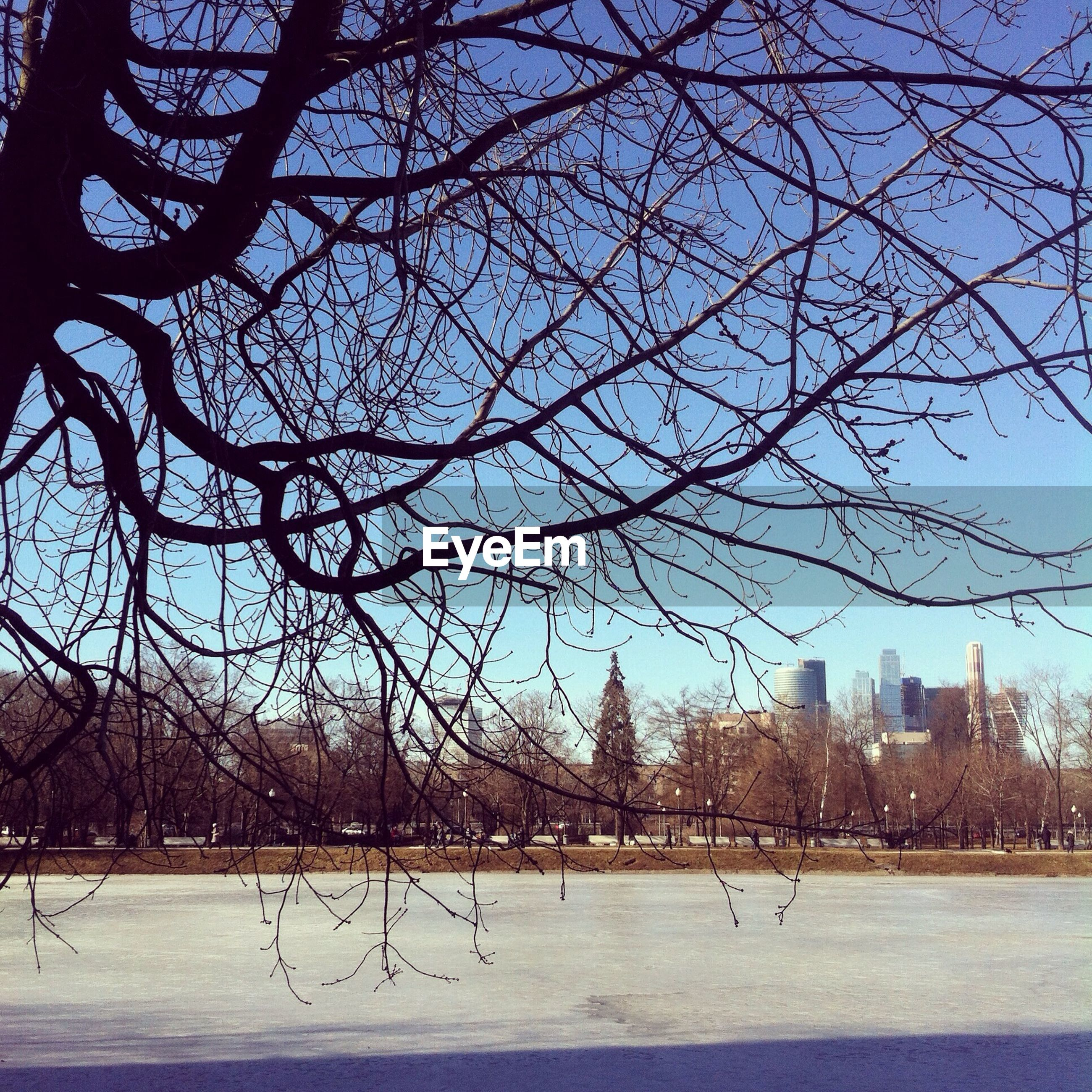 tree, bare tree, branch, architecture, built structure, building exterior, water, sky, city, river, park - man made space, nature, tree trunk, clear sky, day, outdoors, tranquility, lake, travel destinations, incidental people