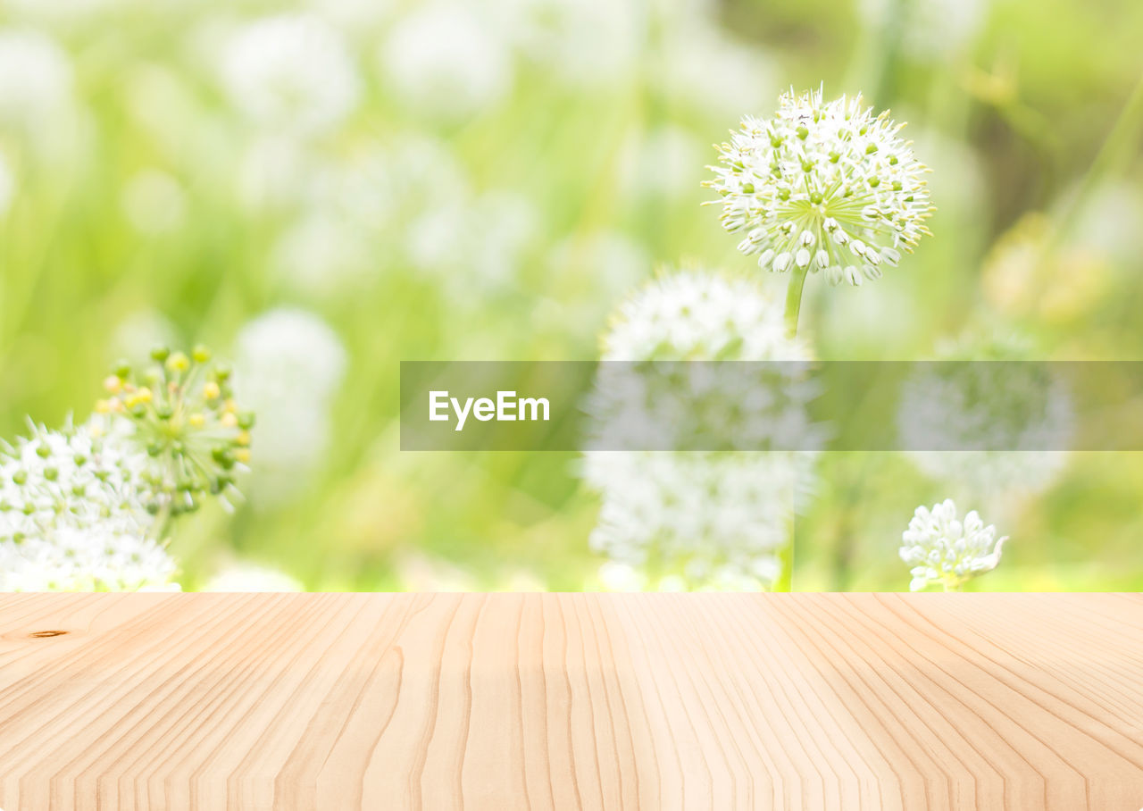 flower, plant, flowering plant, freshness, fragility, beauty in nature, vulnerability, growth, nature, focus on foreground, no people, flower head, close-up, inflorescence, green color, day, outdoors, selective focus, petal, daisy, flower arrangement, flower pot