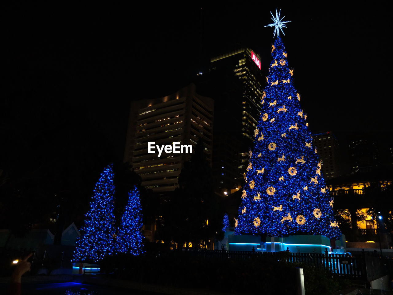 Decorated christmas trees against buildings at night