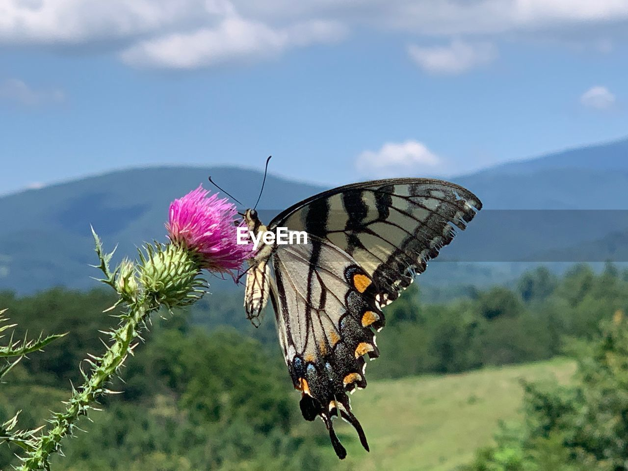 beauty in nature, flower, animal wing, insect, invertebrate, butterfly - insect, plant, flowering plant, animal wildlife, animal, nature, animal themes, animals in the wild, close-up, focus on foreground, one animal, growth, day, fragility, vulnerability, no people, flower head, outdoors, pollination, butterfly