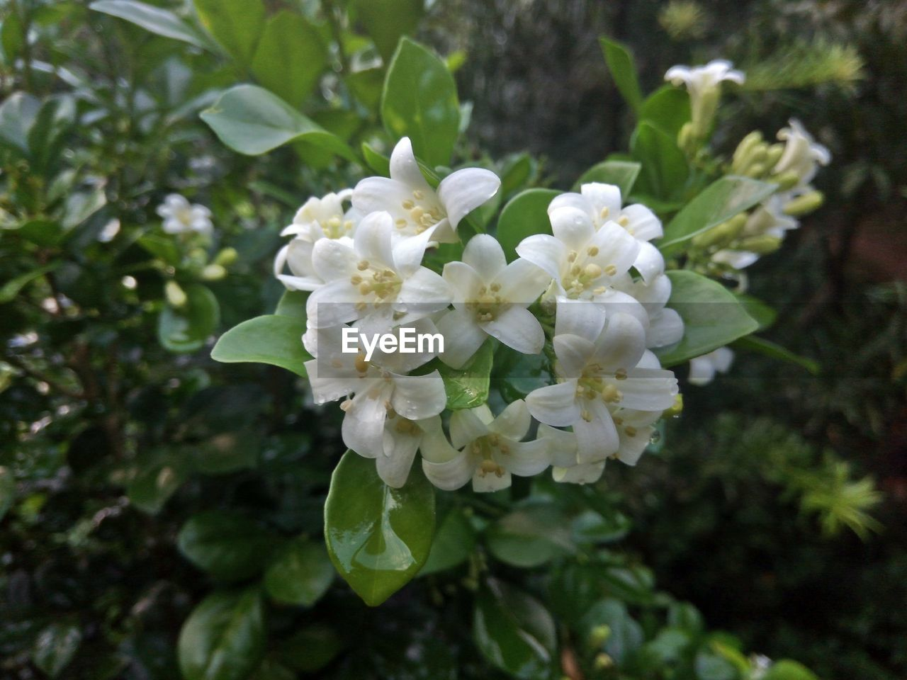 flower, growth, nature, blossom, delicate, green, spring, fragility, plant, blooming, freshness, no people, beauty in nature, tree, flower head, outdoors, day, close-up