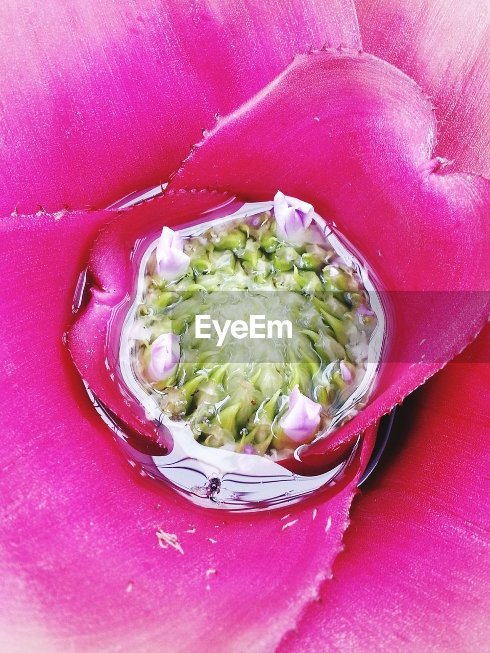 food and drink, freshness, healthy eating, food, no people, vegetable, indoors, close-up, pink color, ready-to-eat, day