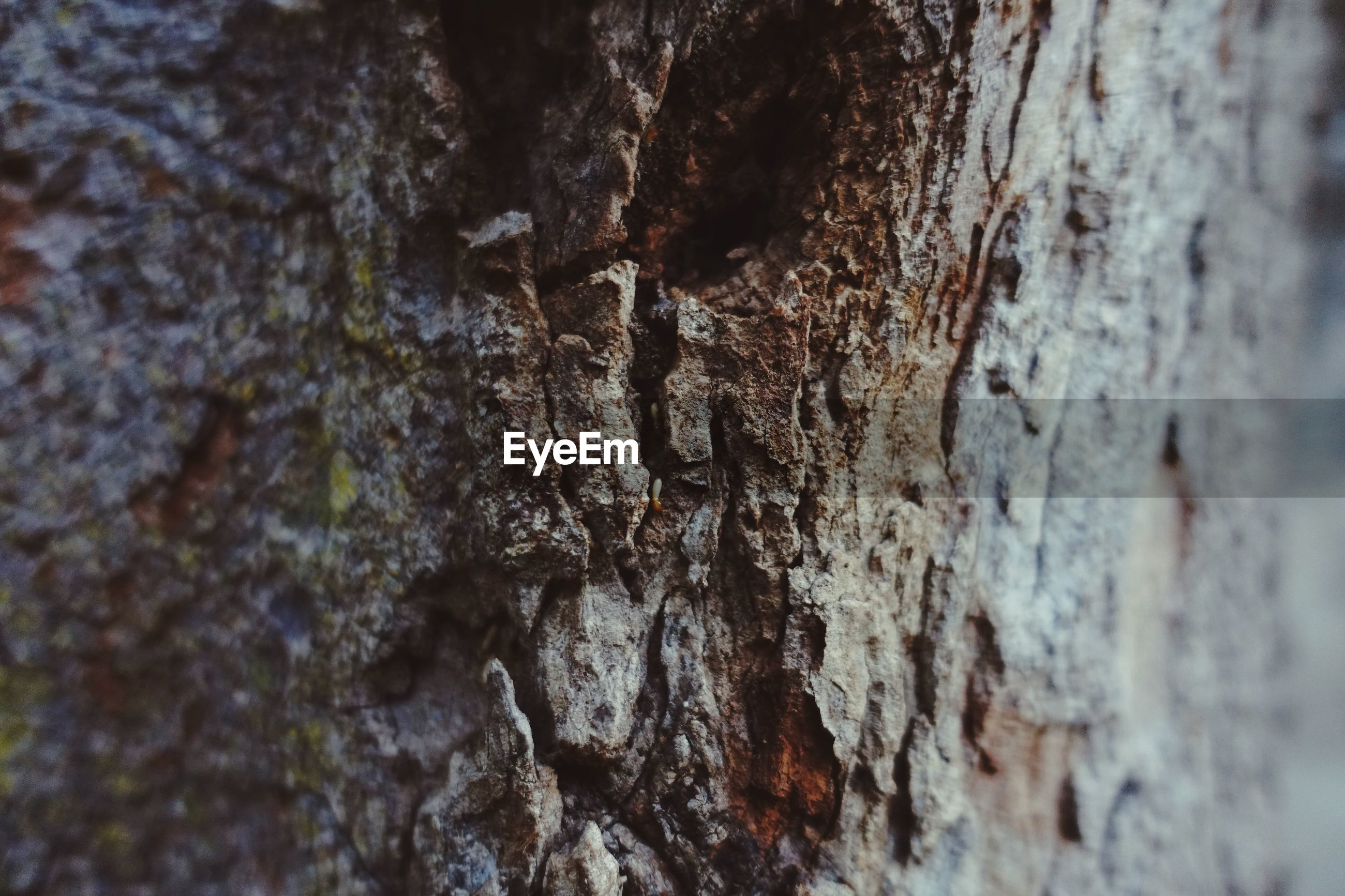 FULL FRAME SHOT OF RUSTY TREE TRUNK