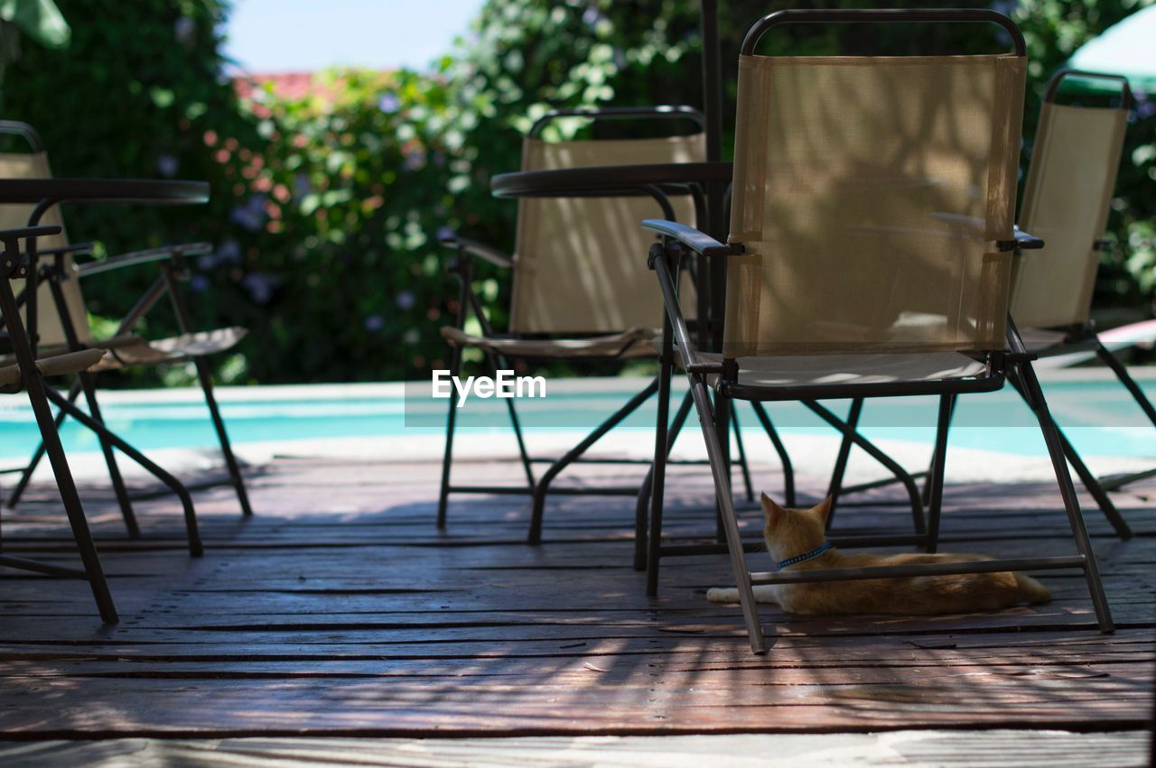 chair, table, one animal, seat, folding chair, absence, animal themes, no people, day, outdoors, outdoor chair, relaxation, water, nature, bird, mammal, sky