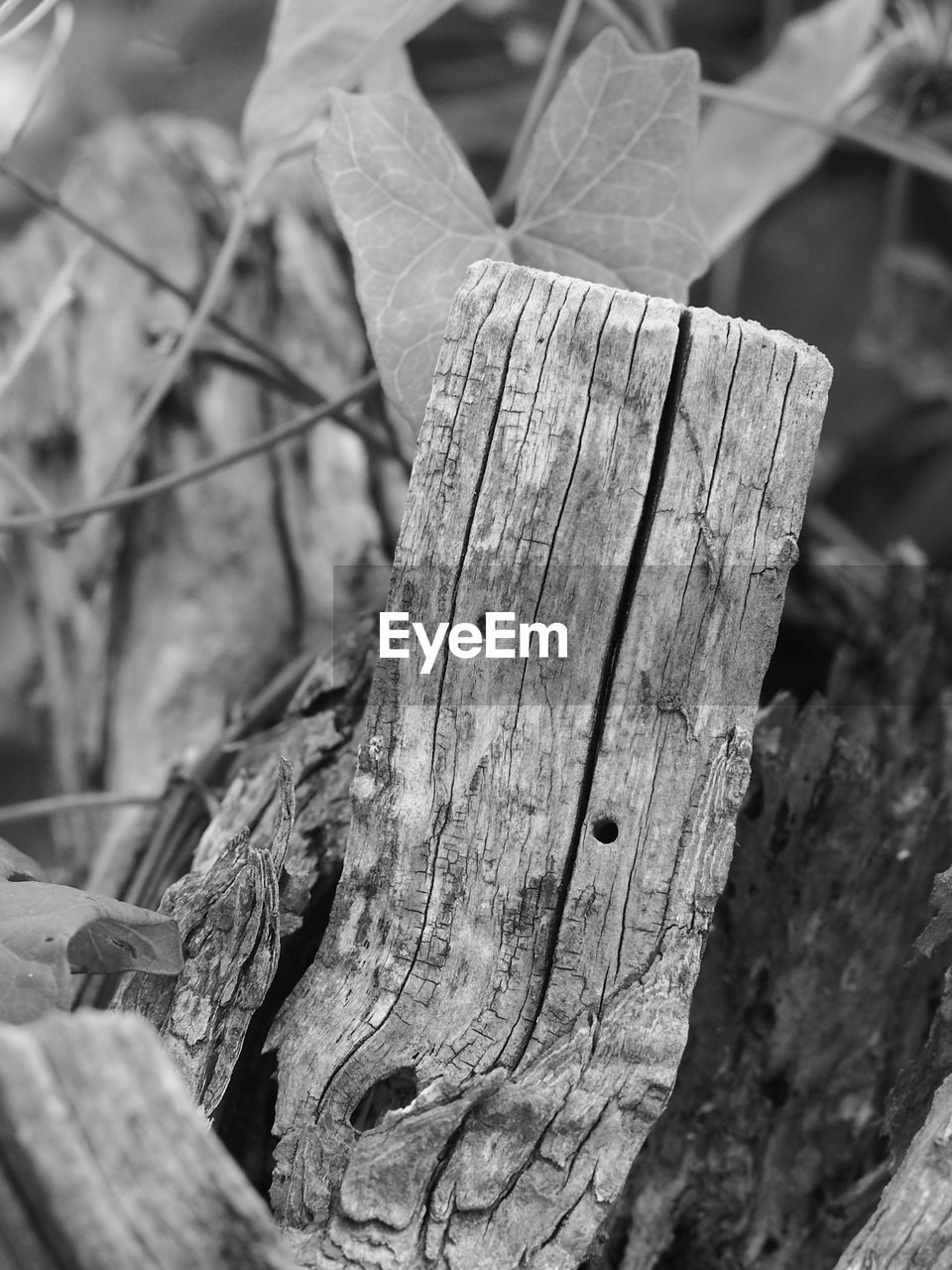 wood - material, tree, focus on foreground, close-up, no people, textured, day, wood, nature, plant, tree trunk, rough, selective focus, outdoors, log, trunk, timber, bark, cracked, pattern, chopped
