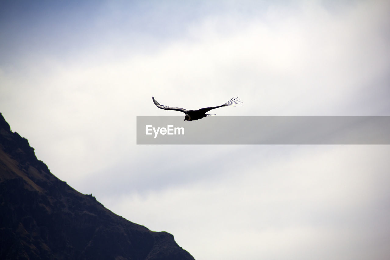 animal themes, bird, flying, one animal, animal, animal wildlife, vertebrate, animals in the wild, low angle view, sky, spread wings, mid-air, cloud - sky, nature, beauty in nature, silhouette, day, outdoors, no people, tranquility, eagle