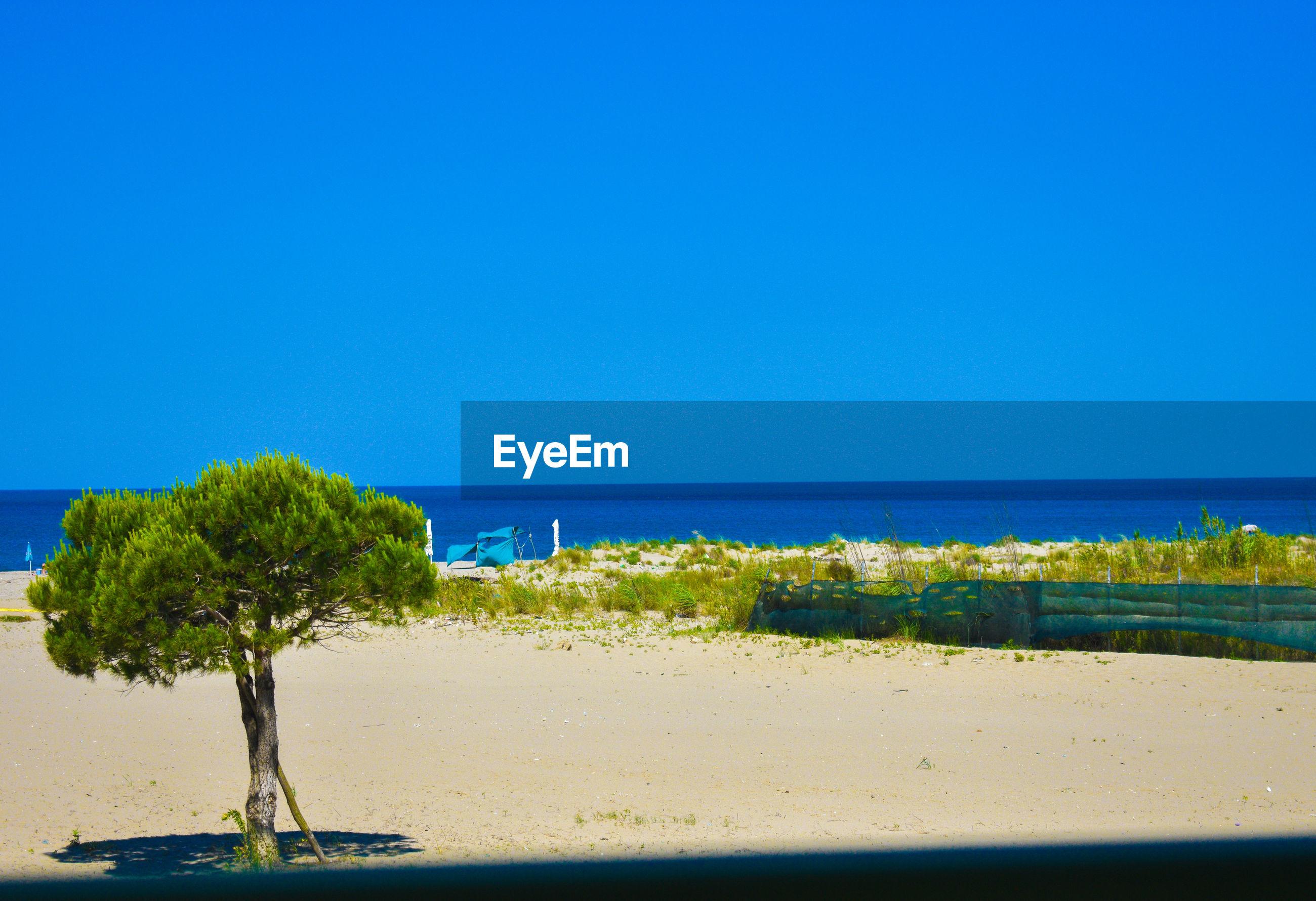 PLANTS ON BEACH AGAINST CLEAR BLUE SKY