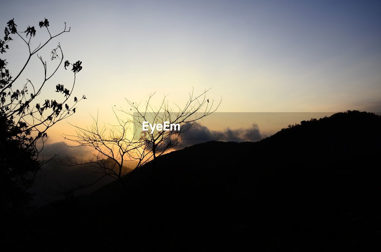 sky, silhouette, sunset, beauty in nature, tranquility, tranquil scene, scenics - nature, plant, nature, tree, no people, mountain, cloud - sky, orange color, idyllic, copy space, non-urban scene, branch, environment, growth, outdoors