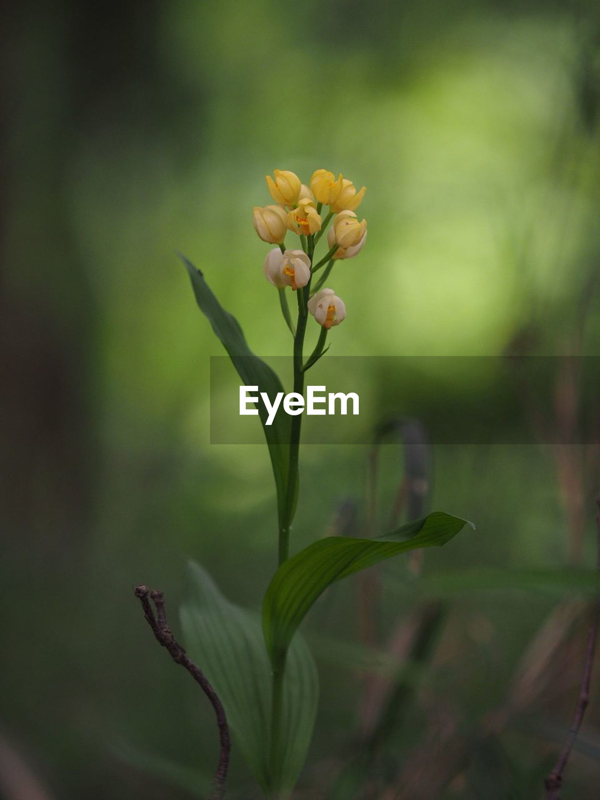 flower, growth, freshness, fragility, petal, plant, focus on foreground, stem, close-up, beauty in nature, nature, flower head, leaf, bud, blooming, selective focus, botany, new life, beginnings, in bloom