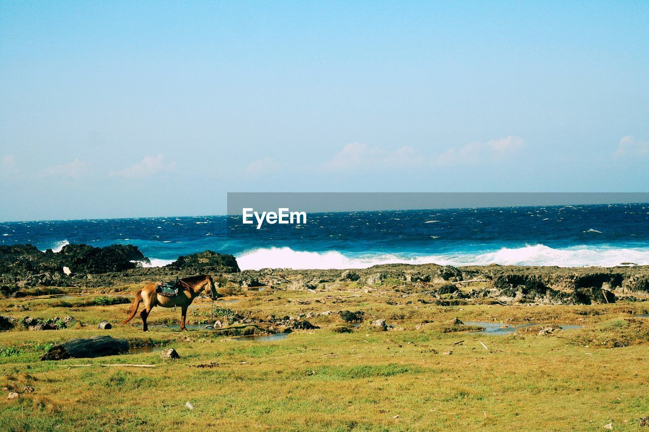 Horse pasturing on field and sea in background