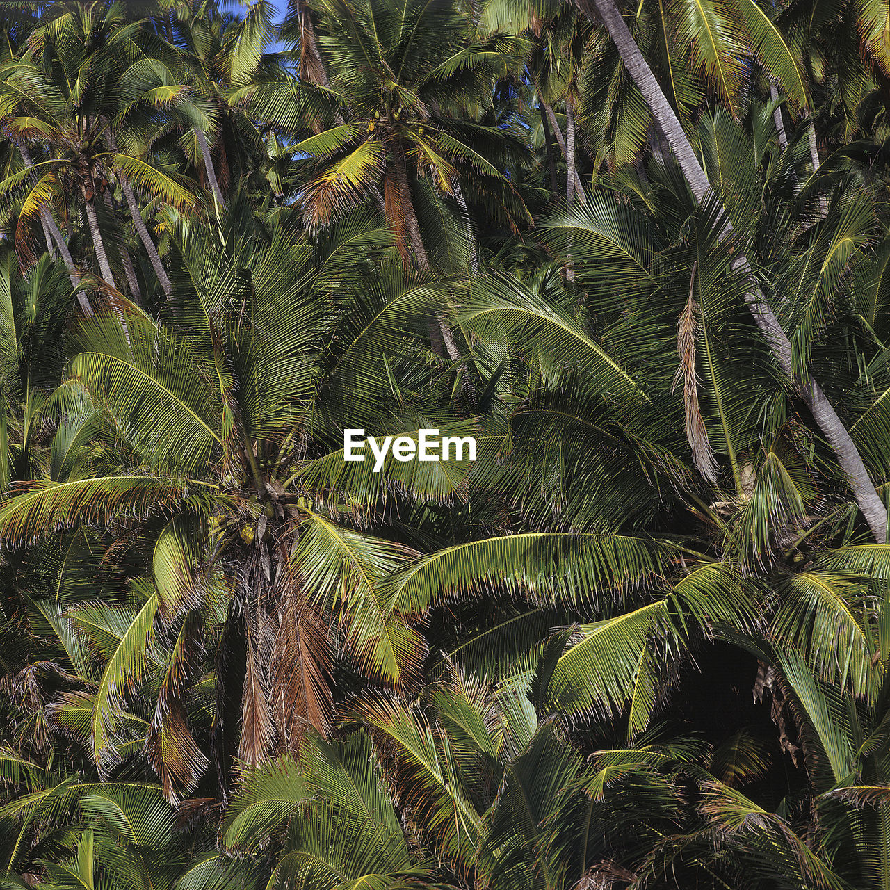 palm tree, nature, tree, growth, plant, no people, backgrounds, full frame, outdoors, scenics, beauty in nature, day, sky