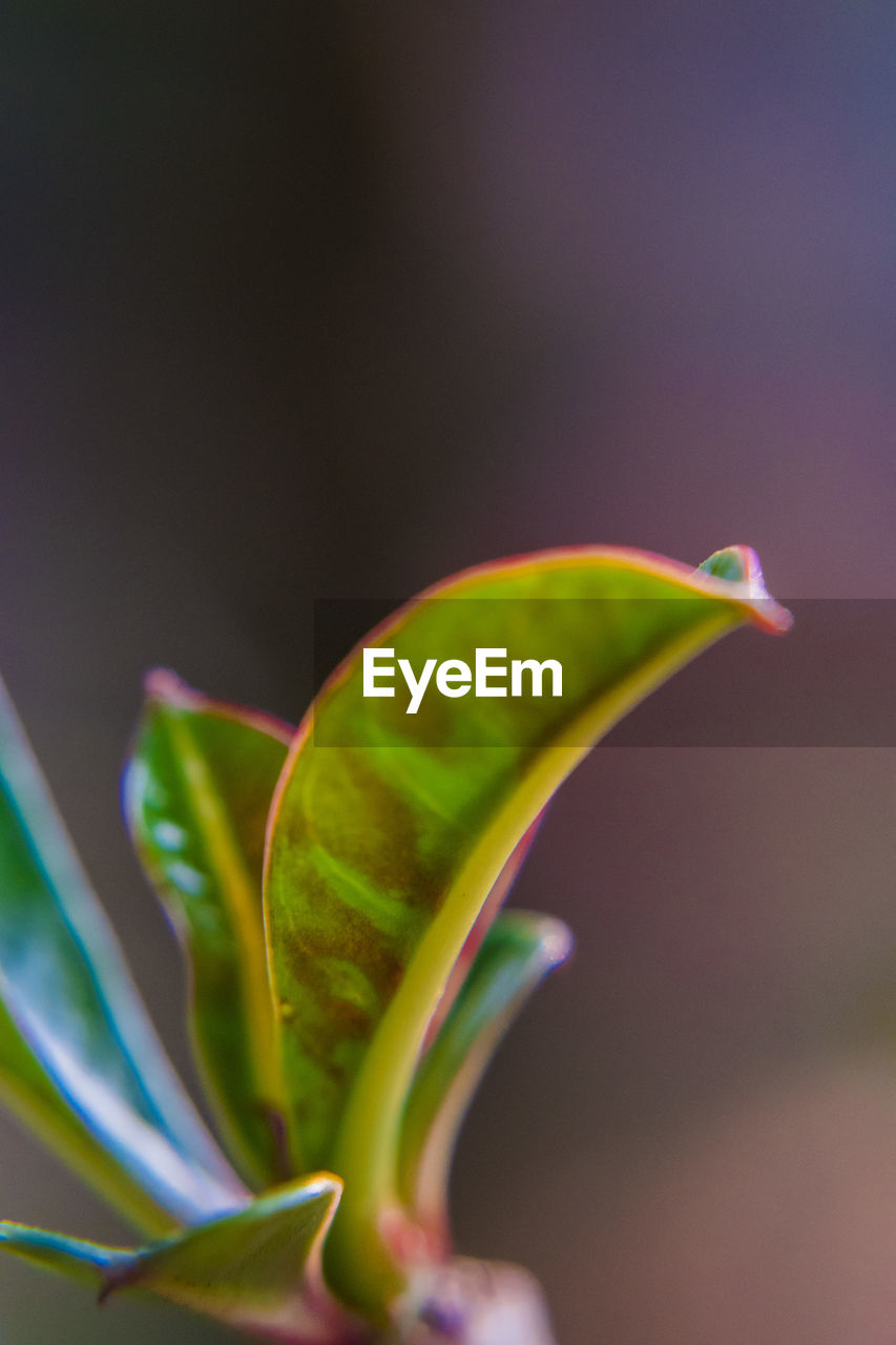 close-up, beauty in nature, plant, freshness, green color, growth, no people, fragility, vulnerability, nature, focus on foreground, plant part, flower, flowering plant, leaf, selective focus, beginnings, indoors, day, new life, flower head, sepal