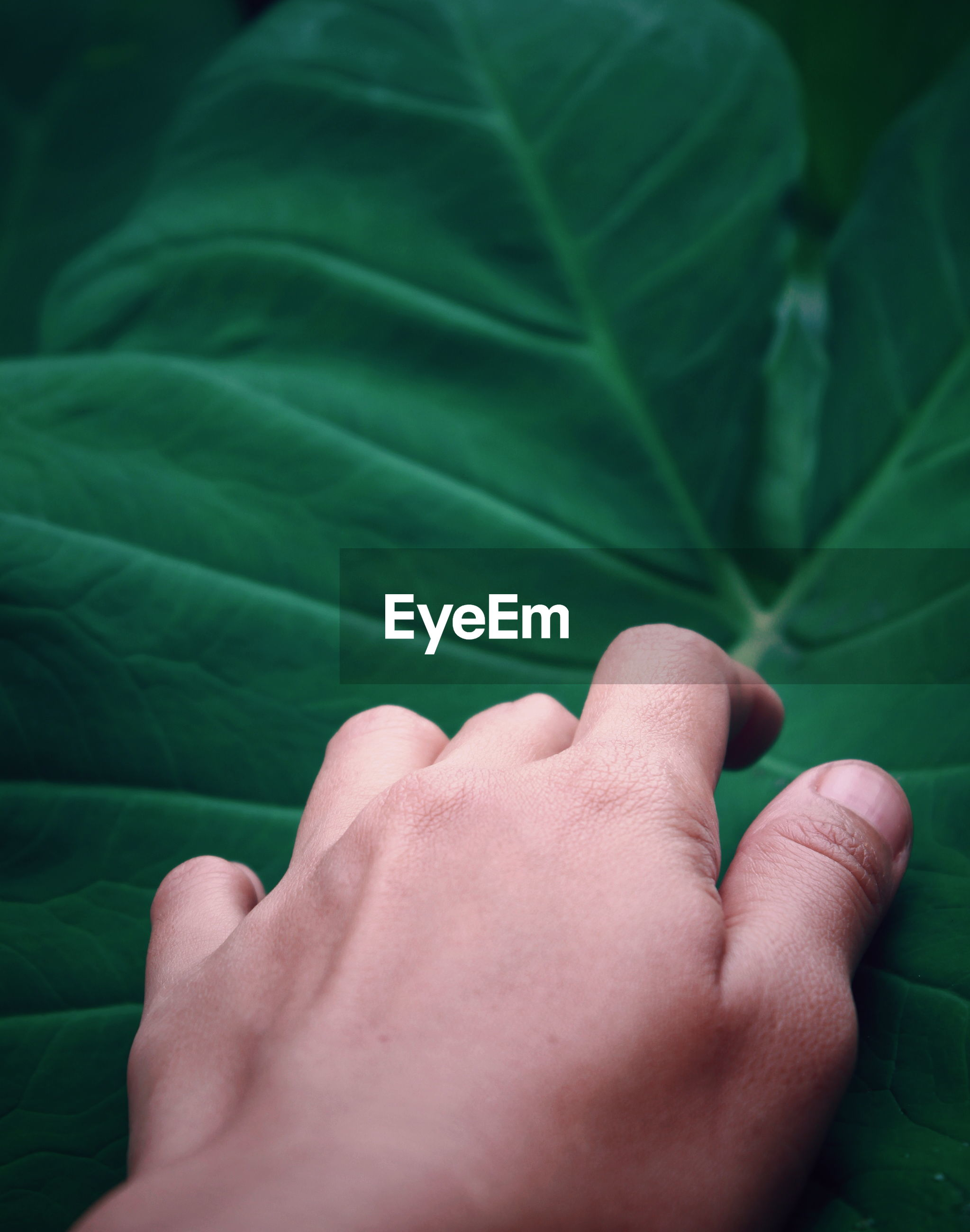 Close-up of hand touching green leaf