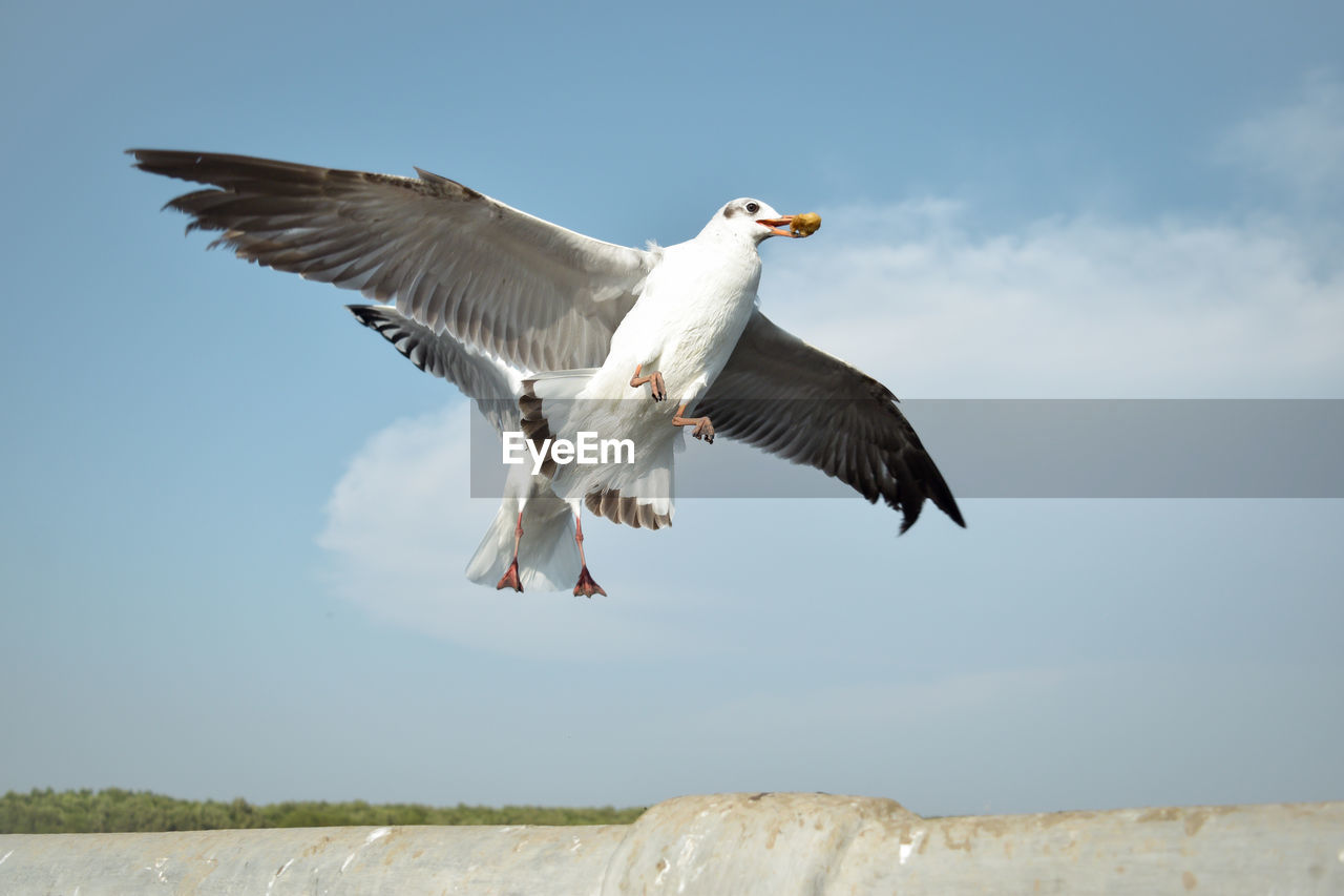 flying, animal, animal themes, vertebrate, animal wildlife, bird, animals in the wild, spread wings, sky, mid-air, one animal, day, no people, nature, seagull, motion, low angle view, water, beauty in nature, cloud - sky, outdoors