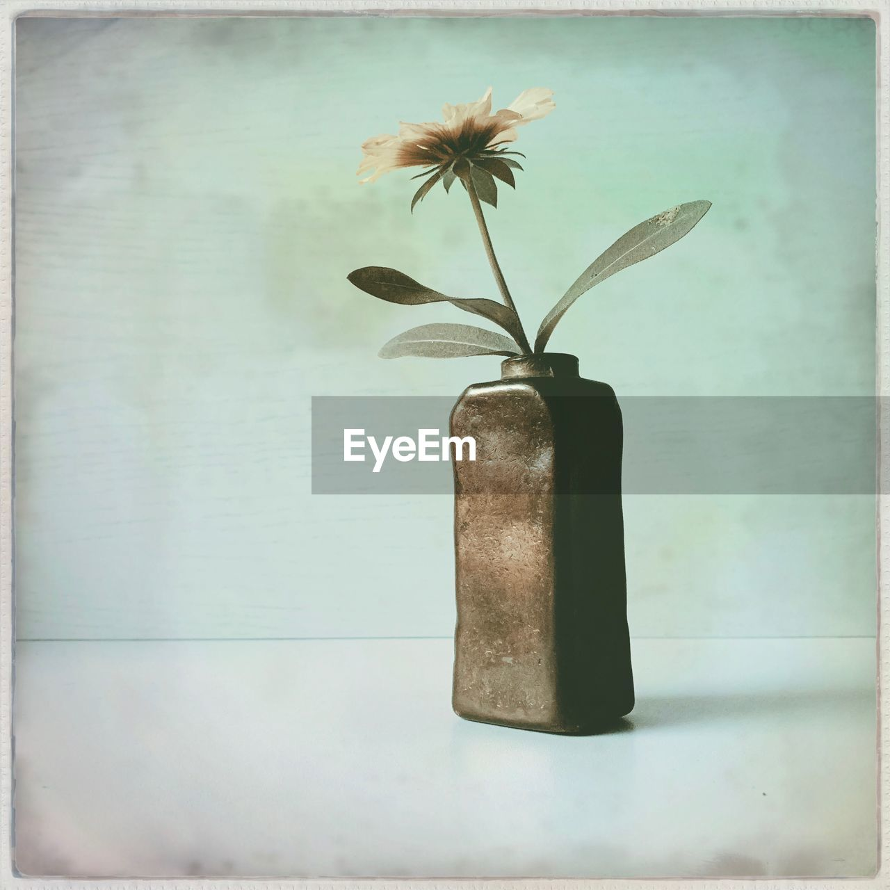 plant, no people, vase, close-up, flower, nature, flowering plant, beauty in nature, auto post production filter, indoors, growth, leaf, transfer print, plant part, day, still life, focus on foreground, freshness, table, flower head
