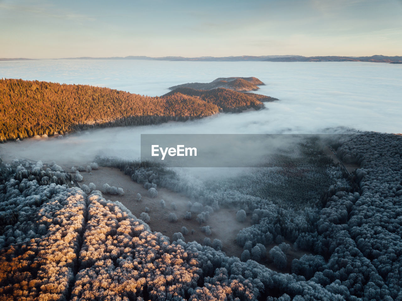 Frosty forest at sunrise with fog and sunlight beams. impressive nature landscape. aerial drone view