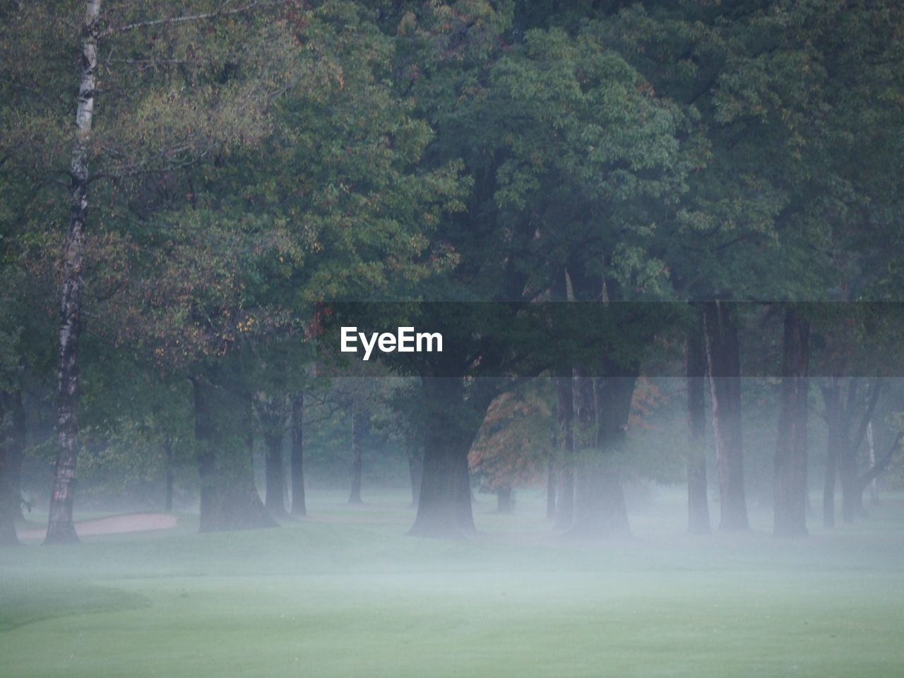 VIEW OF TREES ON LANDSCAPE IN FOGGY WEATHER