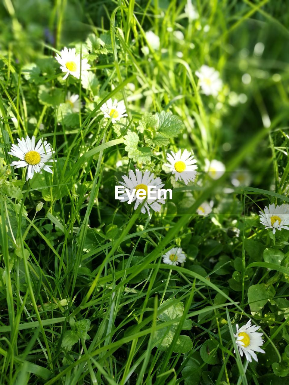 flowering plant, flower, plant, freshness, growth, fragility, vulnerability, beauty in nature, inflorescence, petal, flower head, green color, nature, close-up, yellow, day, white color, no people, field, land, outdoors, pollen