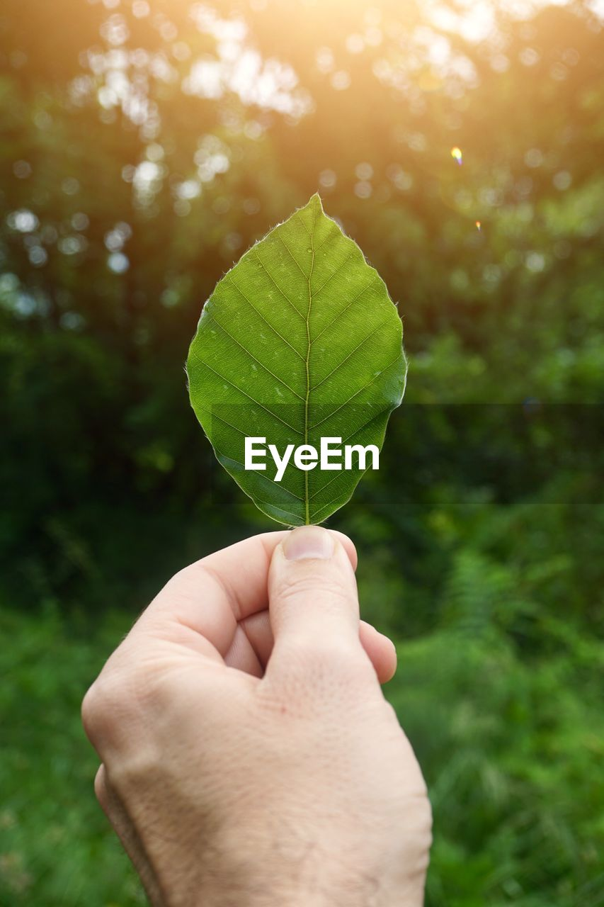 human hand, leaf, hand, plant part, human body part, one person, human finger, real people, holding, plant, unrecognizable person, finger, nature, personal perspective, green color, body part, focus on foreground, close-up, day, tree, outdoors, human limb, leaves