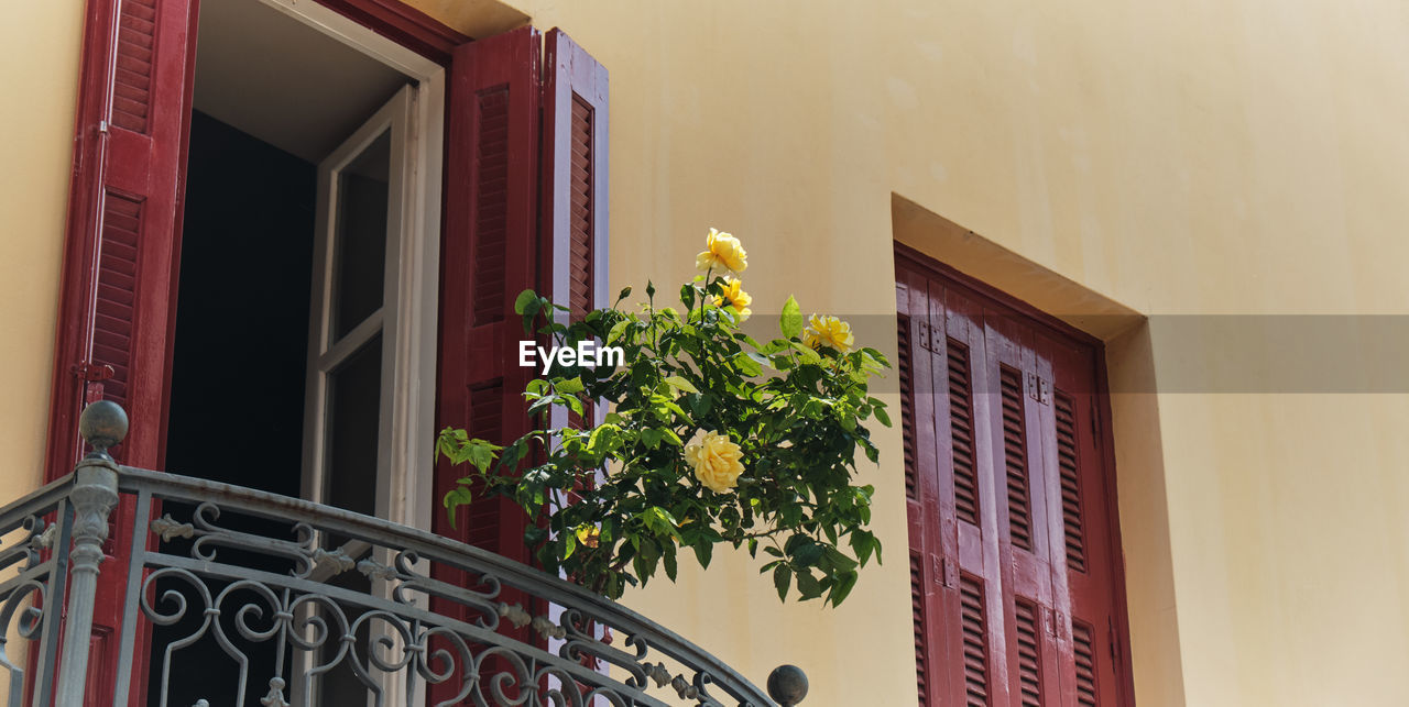 architecture, built structure, building, window, plant, building exterior, no people, house, flower, flowering plant, nature, potted plant, day, door, entrance, low angle view, growth, wall - building feature, residential district, home interior, window box, flower pot, small