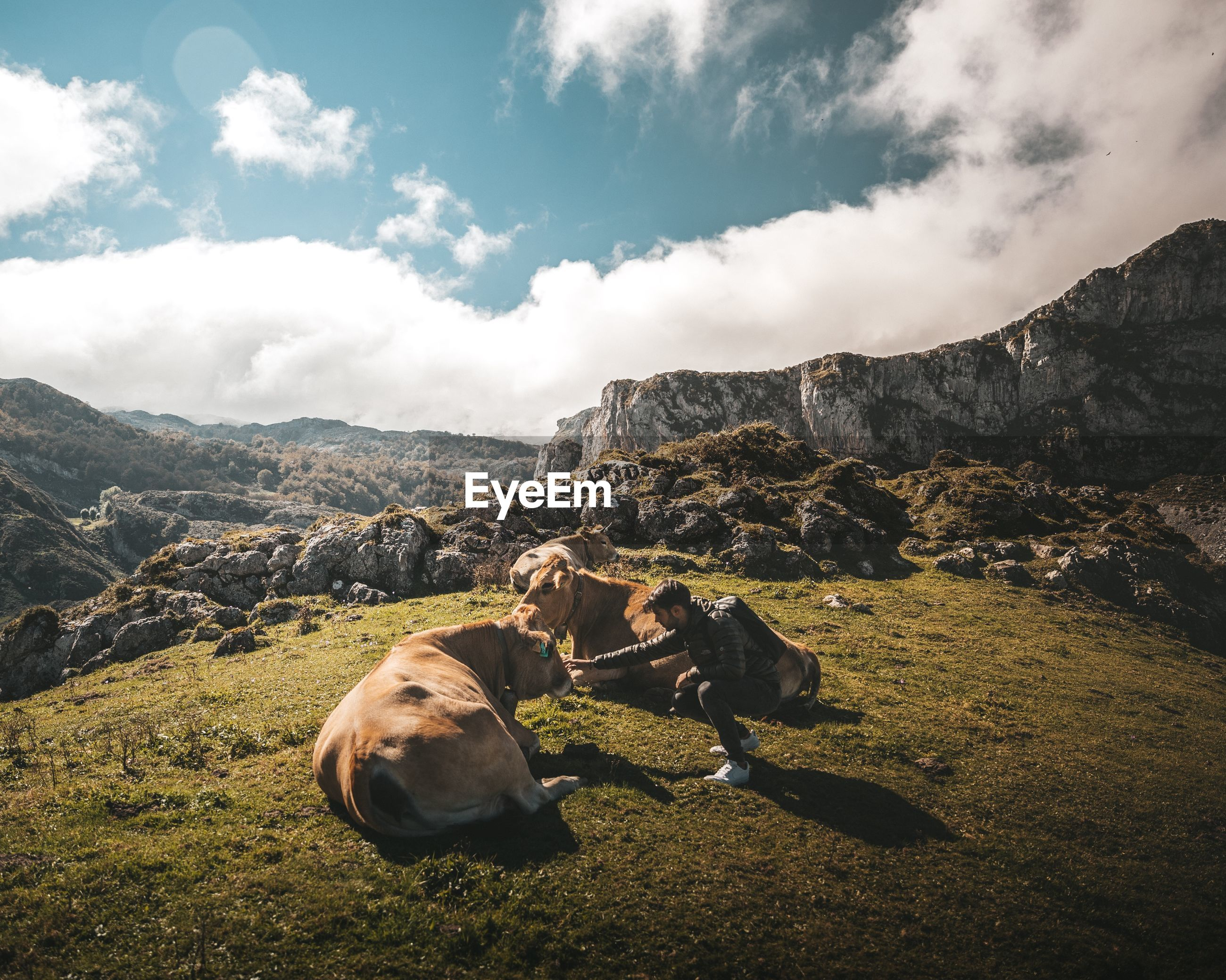 Side view of man stroking cow on field against sky
