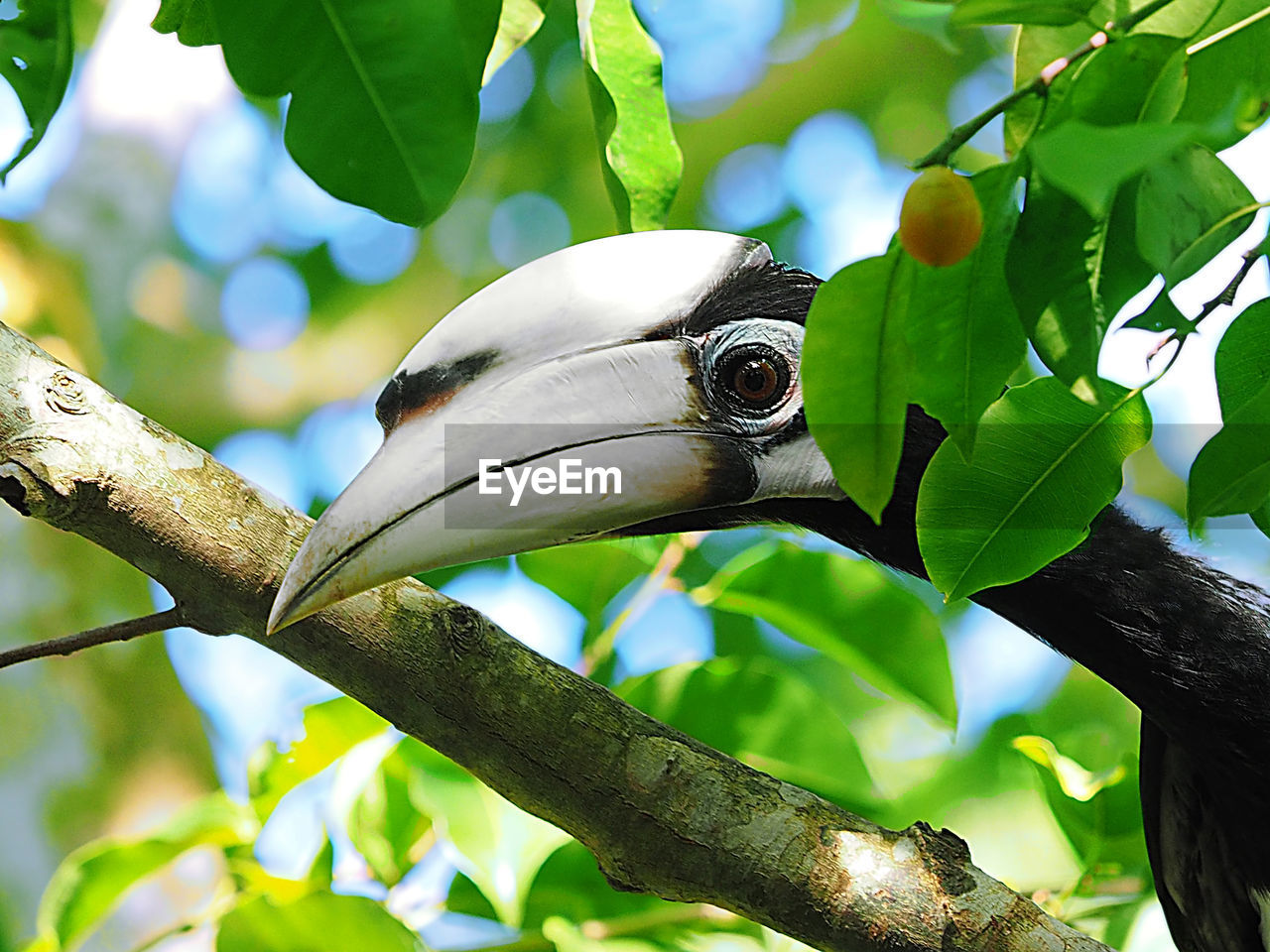animal themes, animal, leaf, vertebrate, plant part, one animal, bird, plant, animals in the wild, animal wildlife, tree, branch, focus on foreground, no people, low angle view, green color, nature, perching, close-up, day, beak, animal head