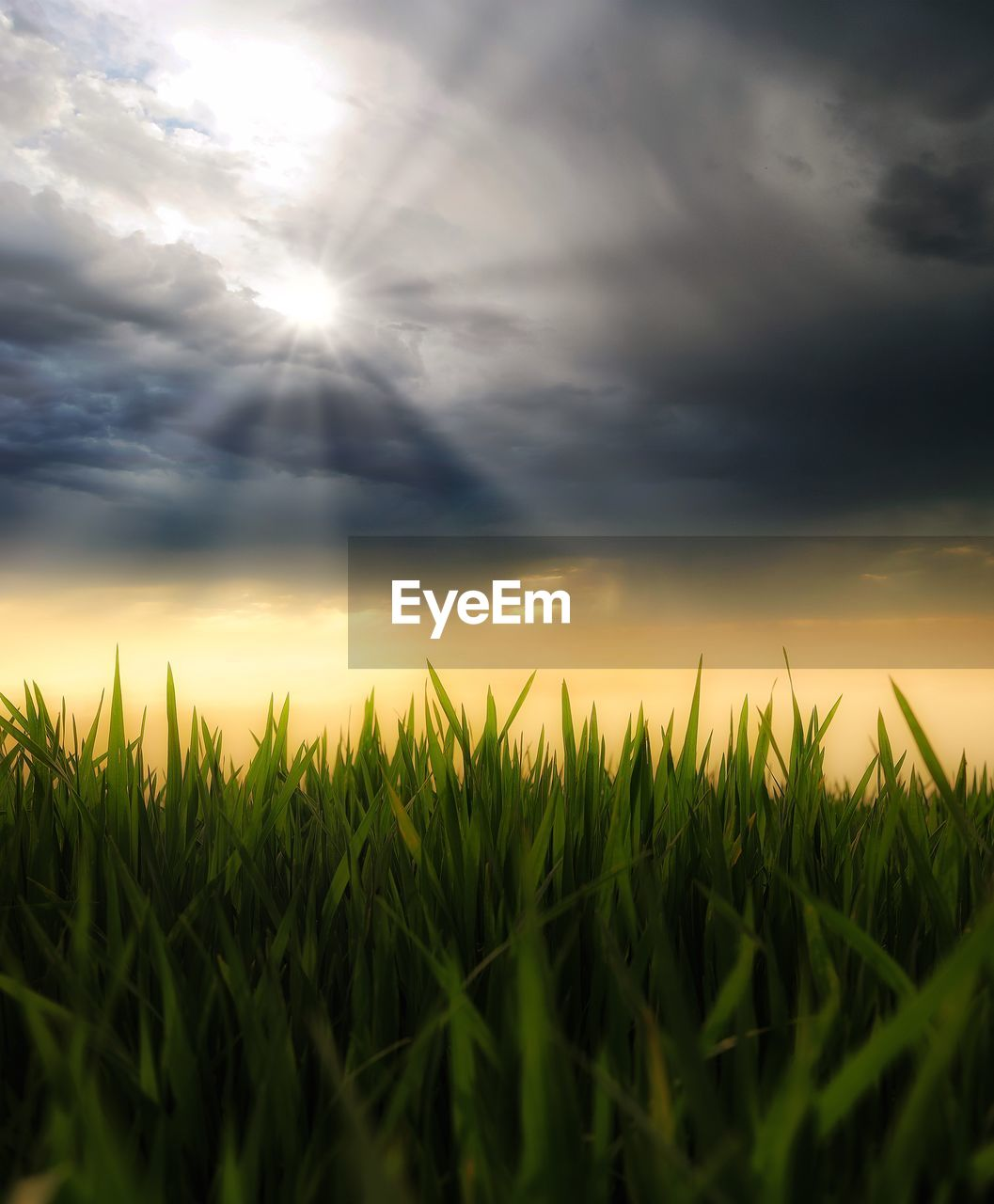 sky, cloud - sky, growth, plant, beauty in nature, land, field, tranquility, agriculture, nature, crop, tranquil scene, sun, scenics - nature, rural scene, sunlight, grass, sunset, landscape, no people, outdoors, lens flare, blade of grass