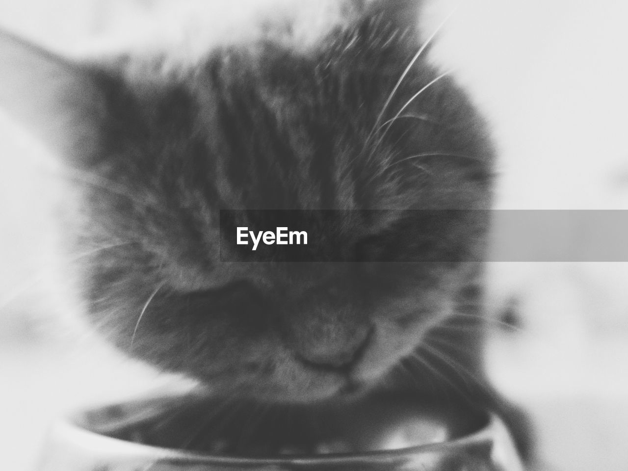 domestic cat, pets, domestic animals, feline, one animal, animal themes, mammal, close-up, whisker, indoors, no people, day
