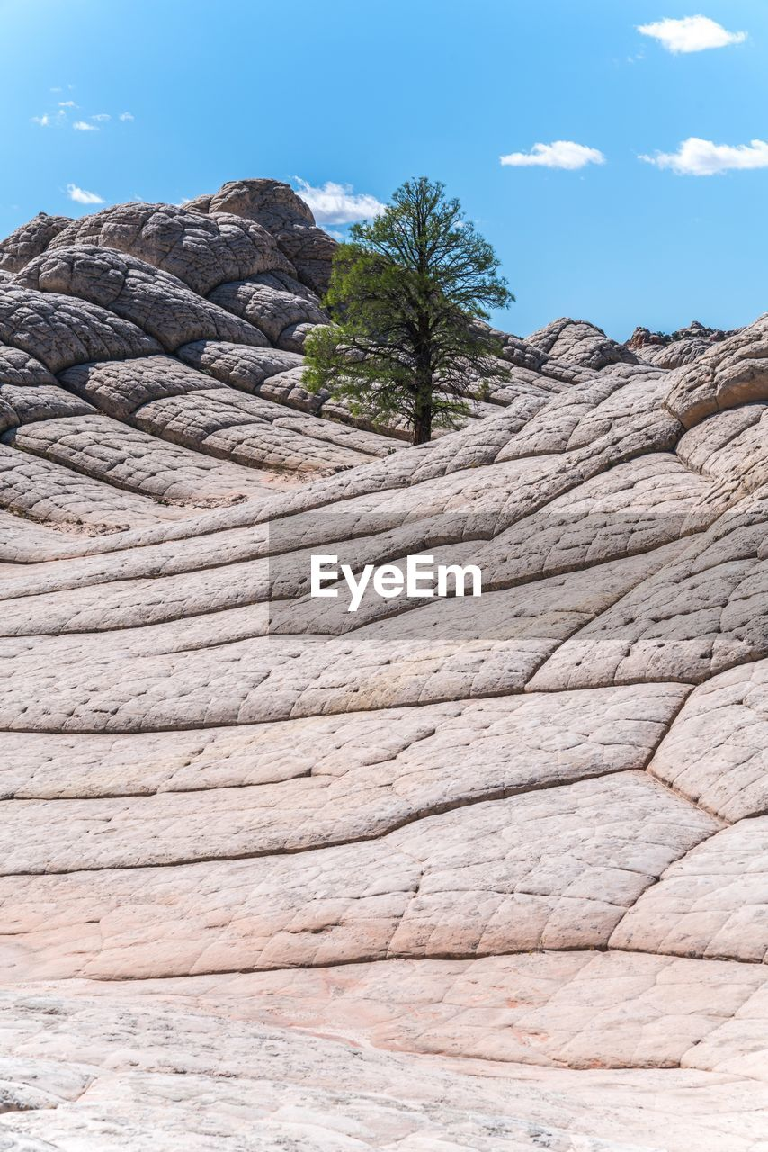 Low Angle View Of Tree Growing On Rock Formation Against Blue Sky