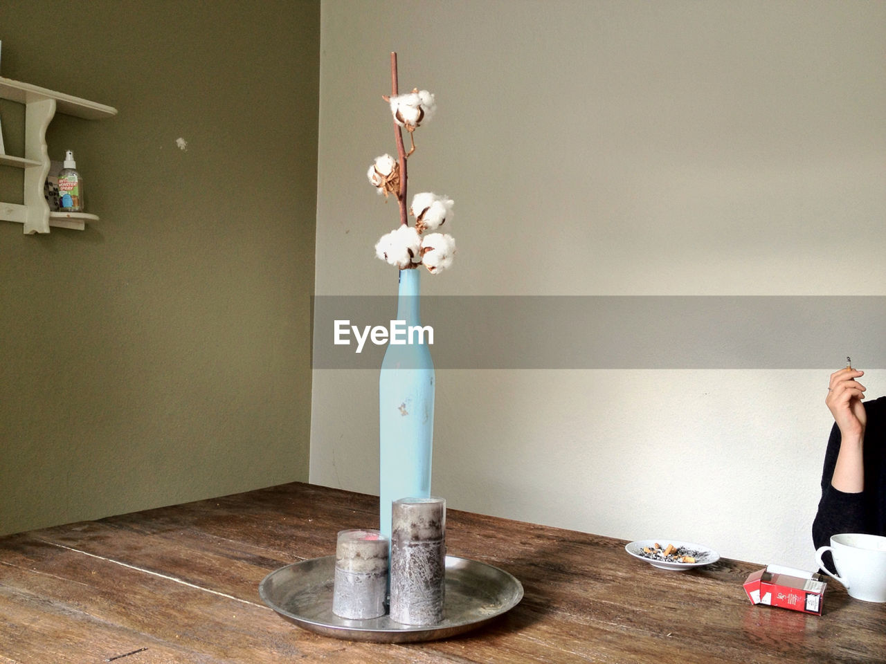 Cotton plant in vase at home