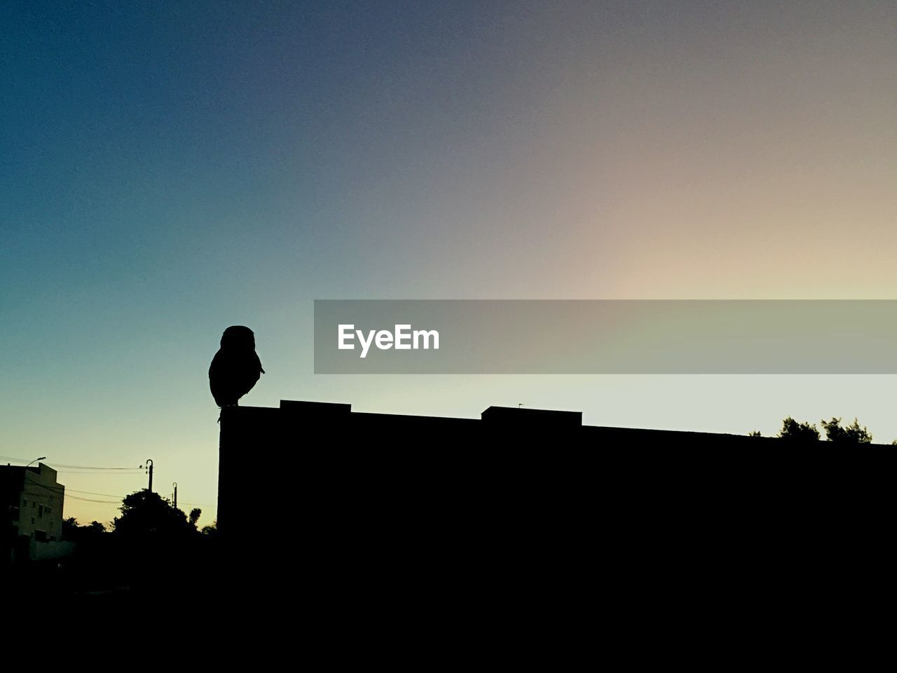 silhouette, low angle view, copy space, bird, sunset, animal themes, animals in the wild, outdoors, perching, clear sky, one animal, no people, architecture, building exterior, built structure, crow, communication, tree, nature, day, raven - bird, sky