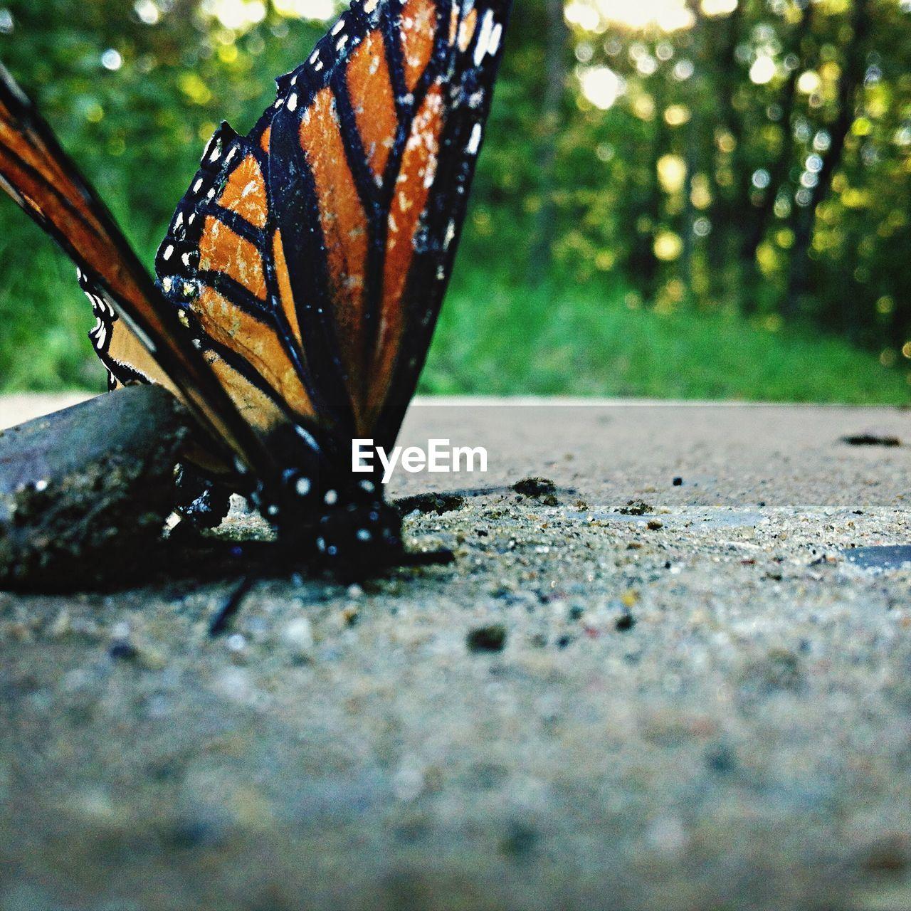 Dead Butterfly Lying On Floor