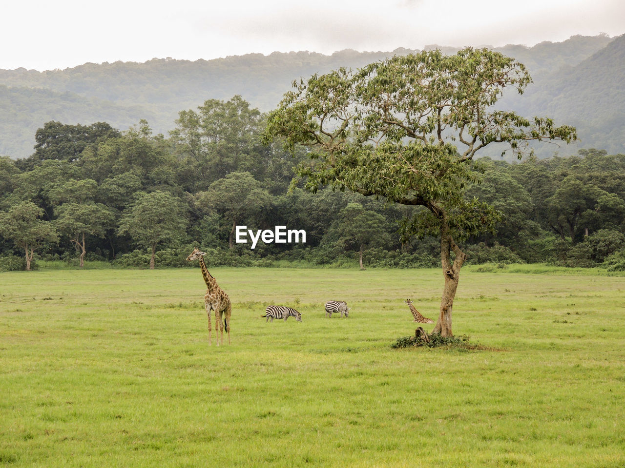 plant, tree, animal, animal themes, mammal, grass, green color, landscape, environment, land, nature, day, field, animal wildlife, vertebrate, domestic animals, livestock, no people, group of animals, beauty in nature, outdoors, herbivorous