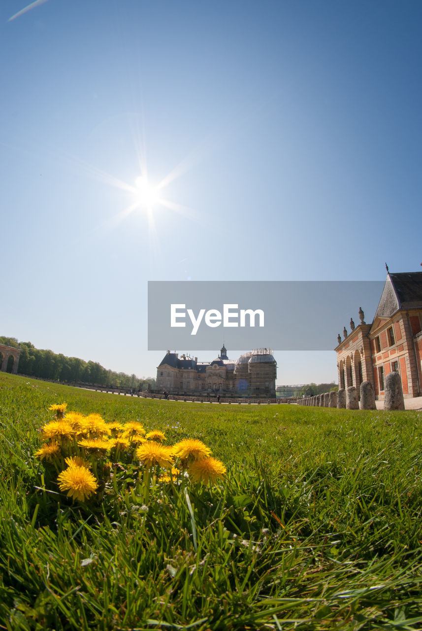sun, sunbeam, flower, sunlight, architecture, lens flare, nature, field, building exterior, beauty in nature, clear sky, grass, plant, growth, outdoors, yellow, built structure, no people, sky, sunshine, day, freshness