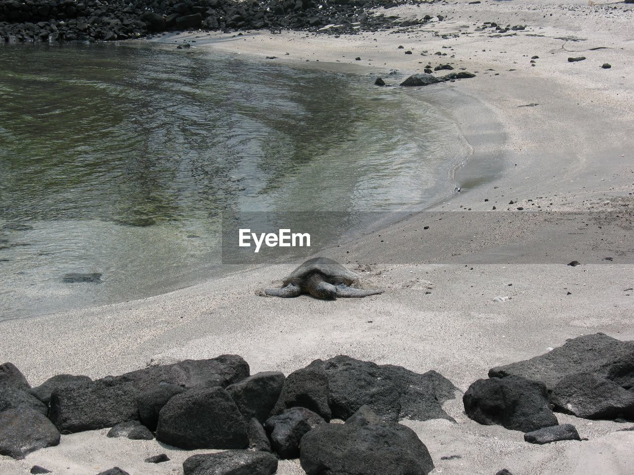 Close-Up Of Turtle Resting On Beach