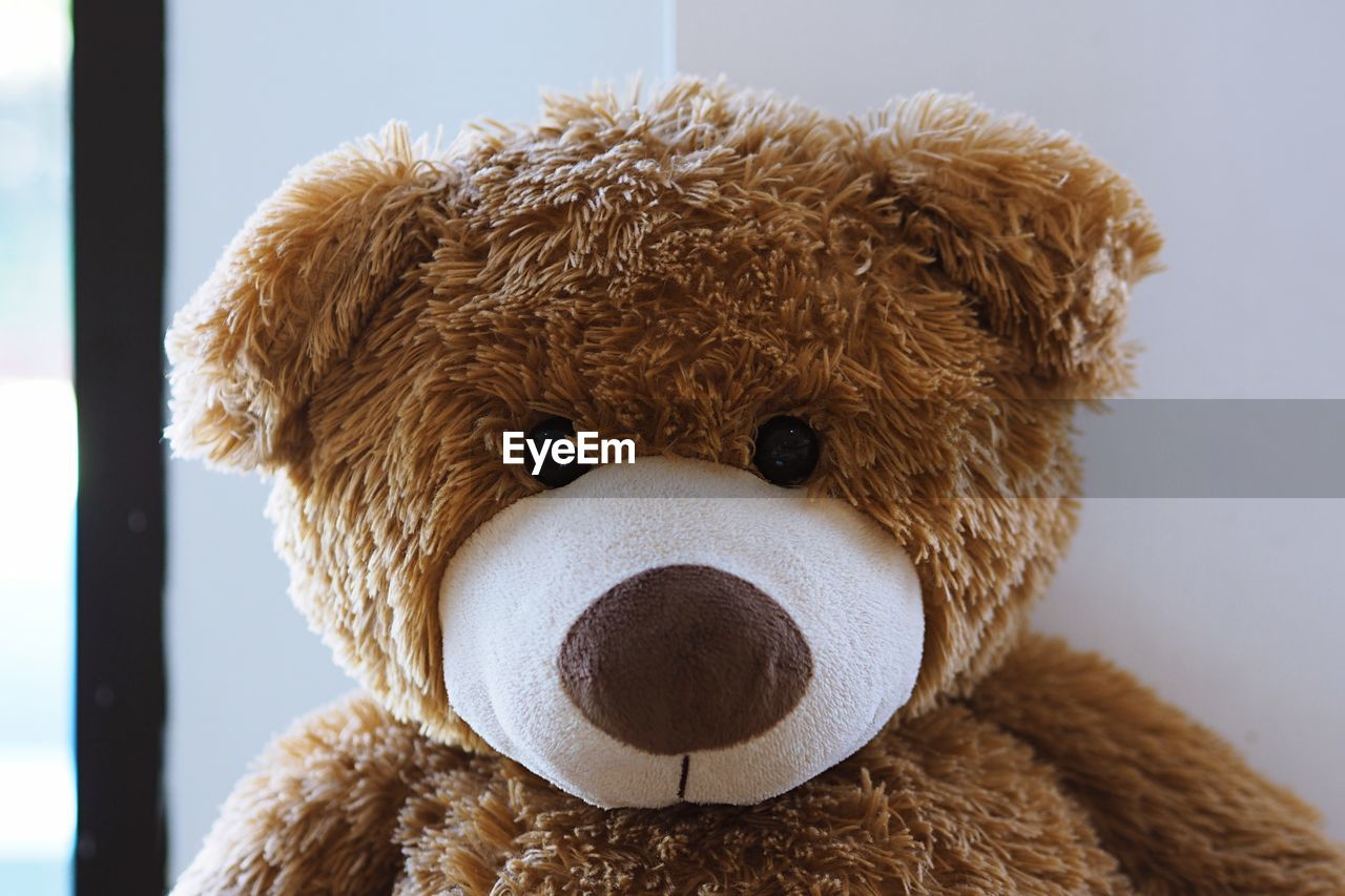 CLOSE-UP OF STUFFED TOY IN THE ANIMAL