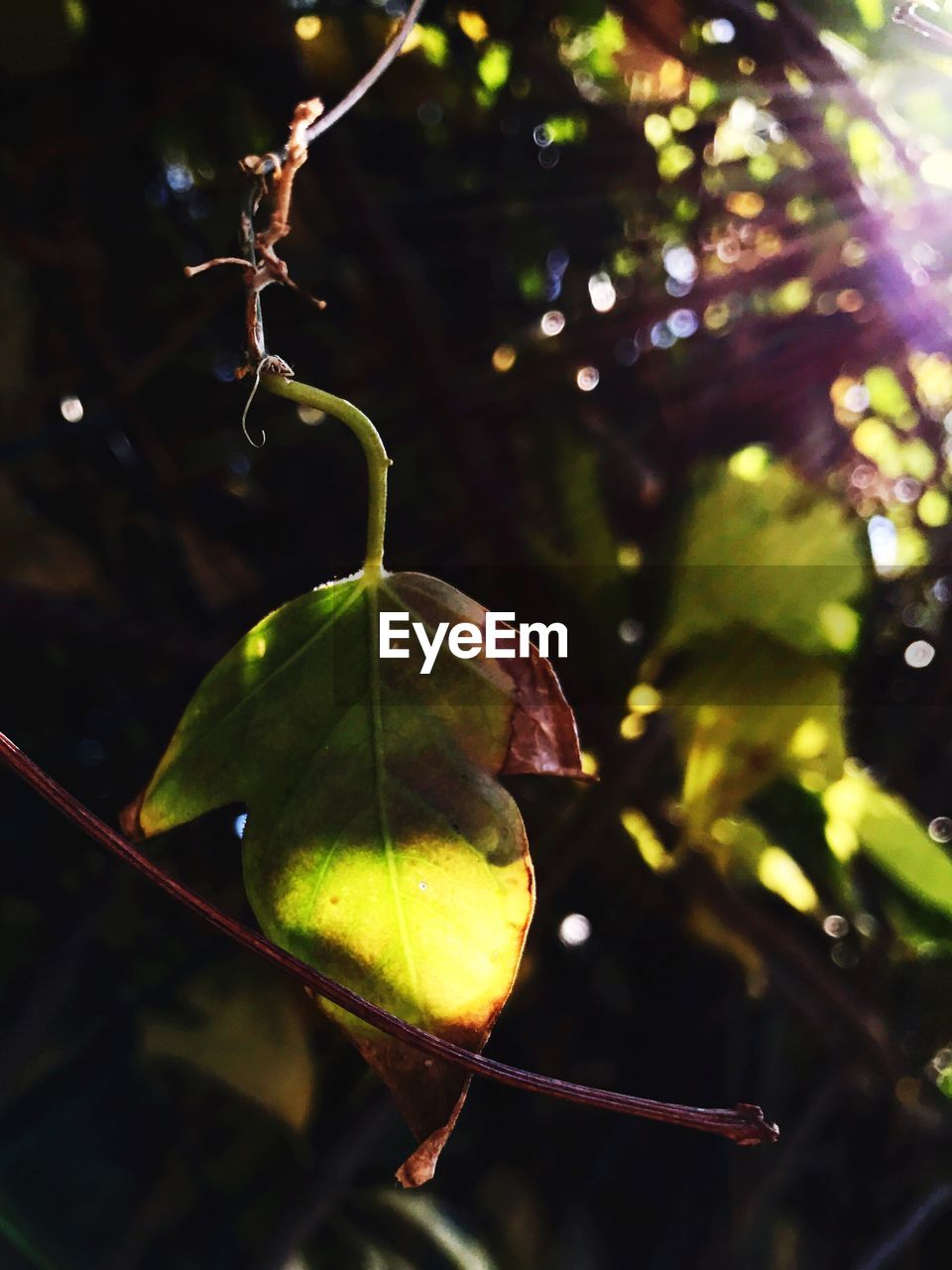 leaf, close-up, green color, nature, focus on foreground, outdoors, no people, growth, plant, beauty in nature, tree, day, fruit, freshness, branch, food, water, animal themes