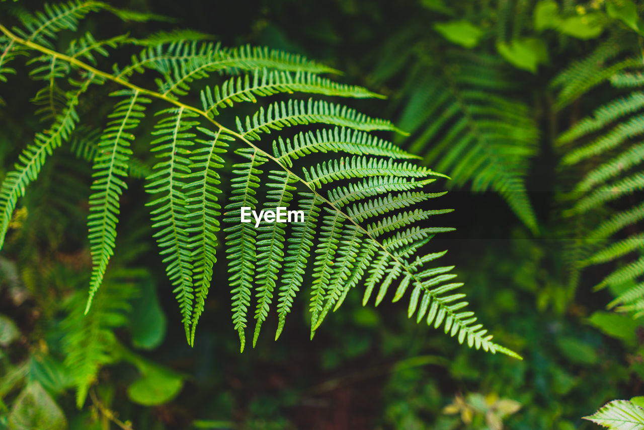 Close-Up Of Fern Leaves On Tree In Forest