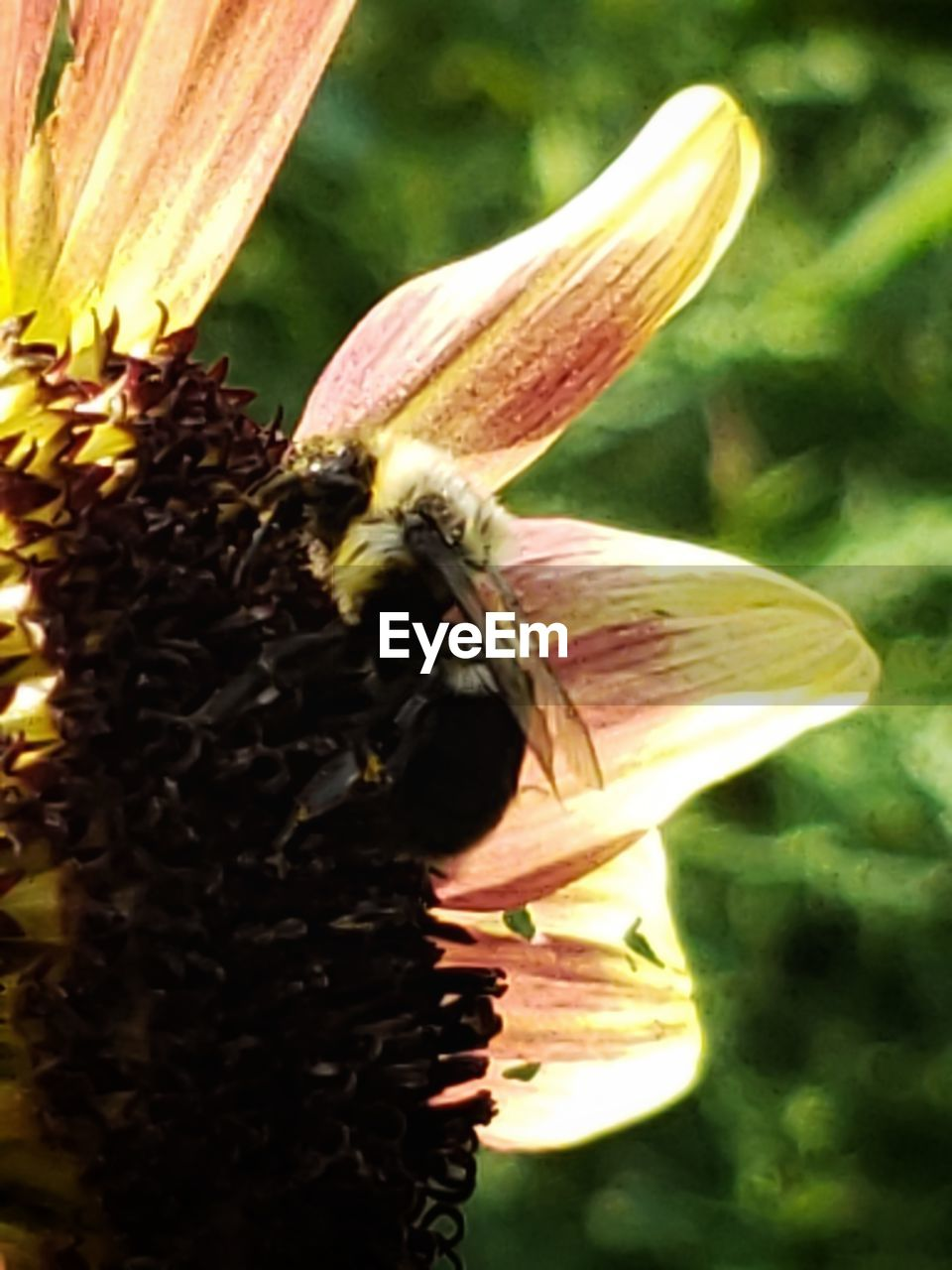 invertebrate, close-up, flowering plant, flower, insect, growth, animals in the wild, animal, animal themes, plant, one animal, bee, beauty in nature, animal wildlife, freshness, petal, vulnerability, fragility, no people, flower head, pollen, pollination, outdoors